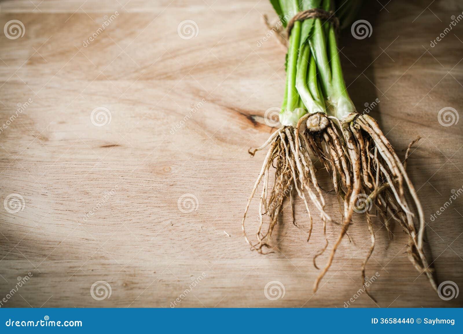 Root Of Long Coriander Stock Photo Image 36584440