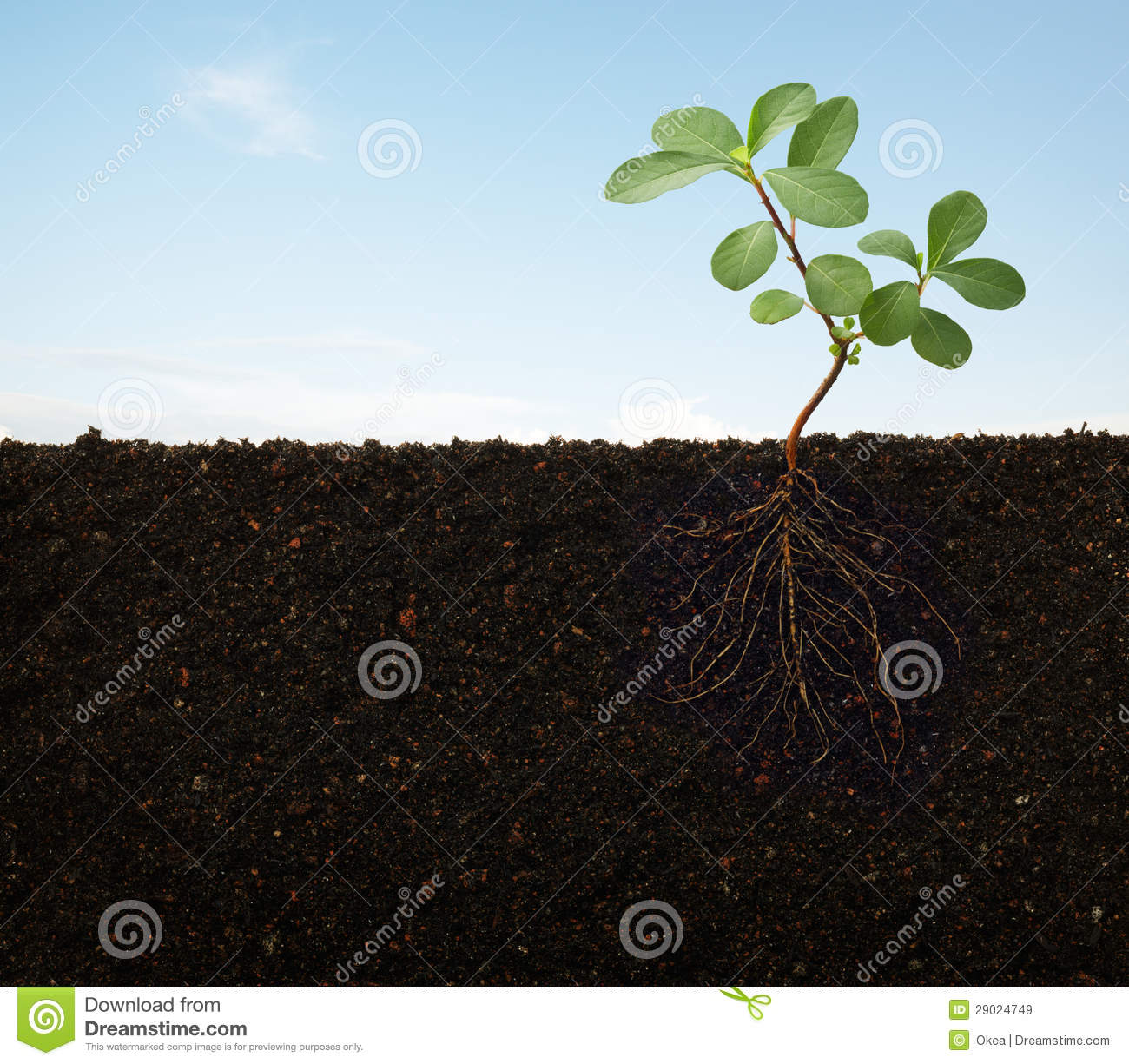 Roots of a plant