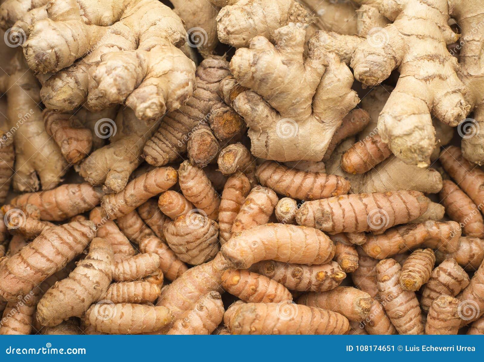 Roots Of Turmeric And Ginger  Curcuma Longa And Zingiber