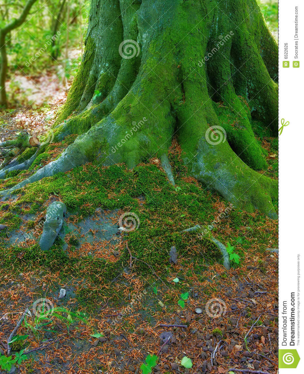 The Roots - Very Sharp And Detailed Royalty Free Stock ...