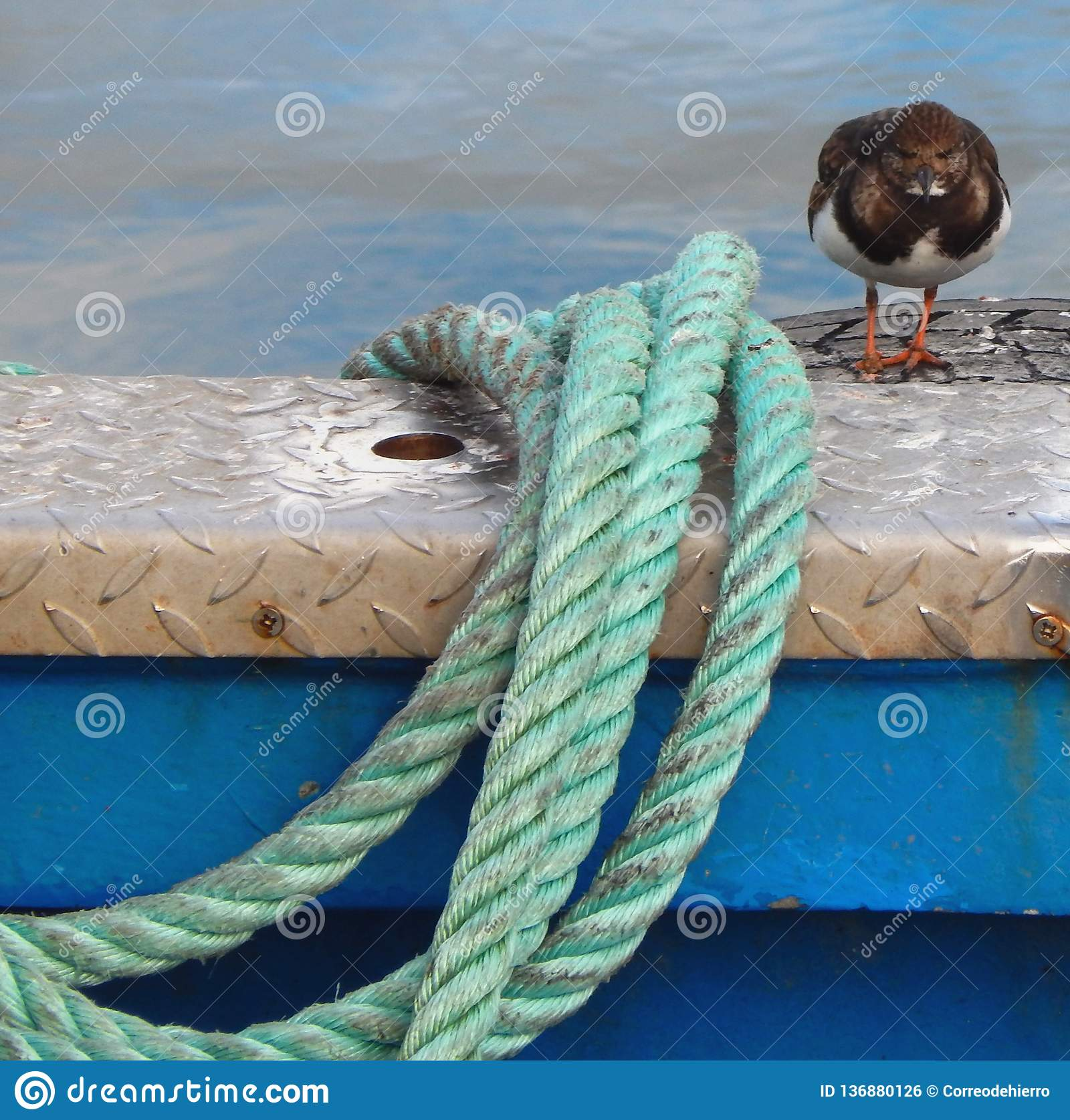 Rope and bird on boat