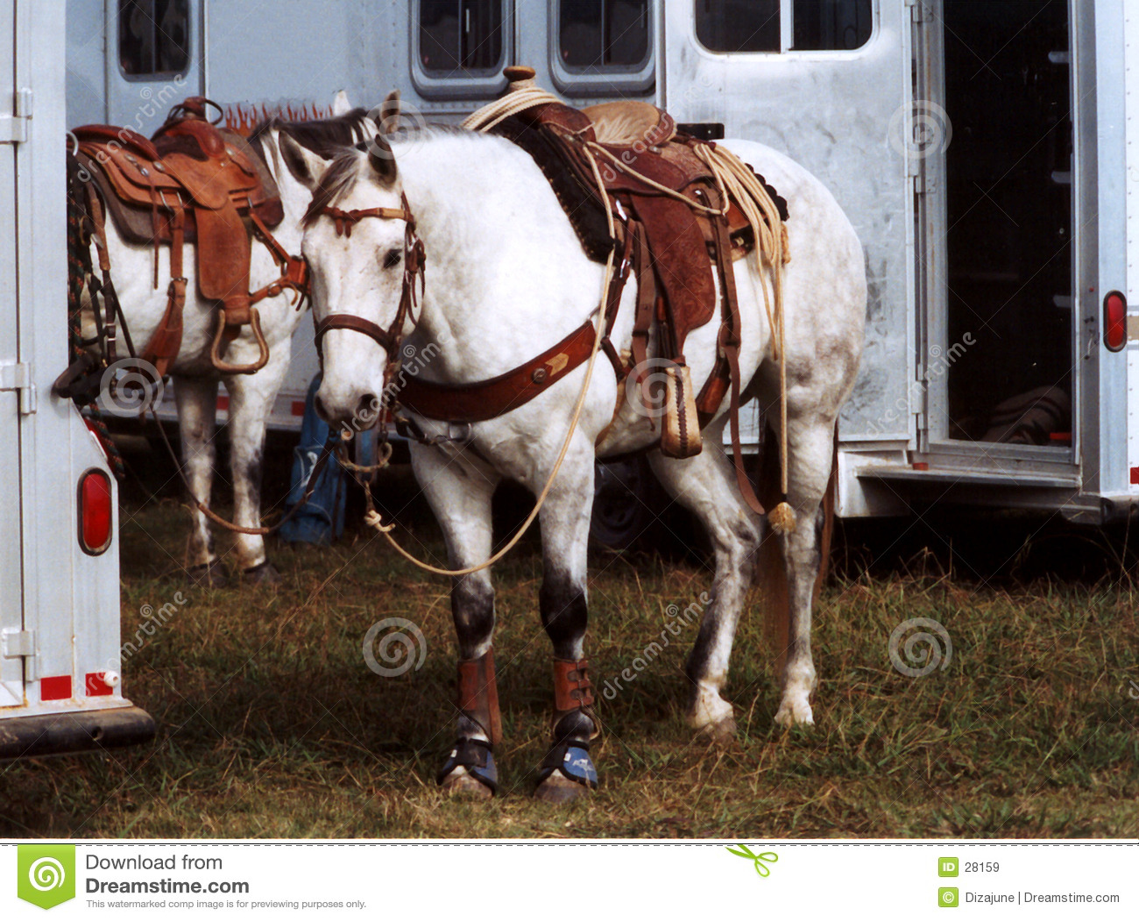Roping лошадей