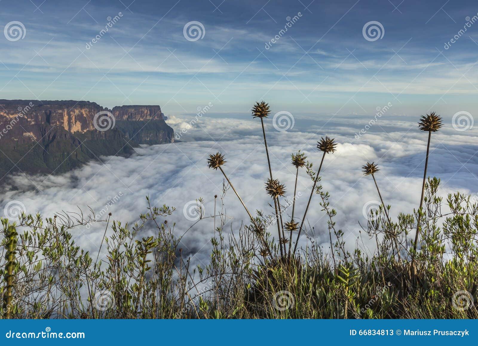从Roraima tepui的看法在薄雾的Kukenan tepui - Venez