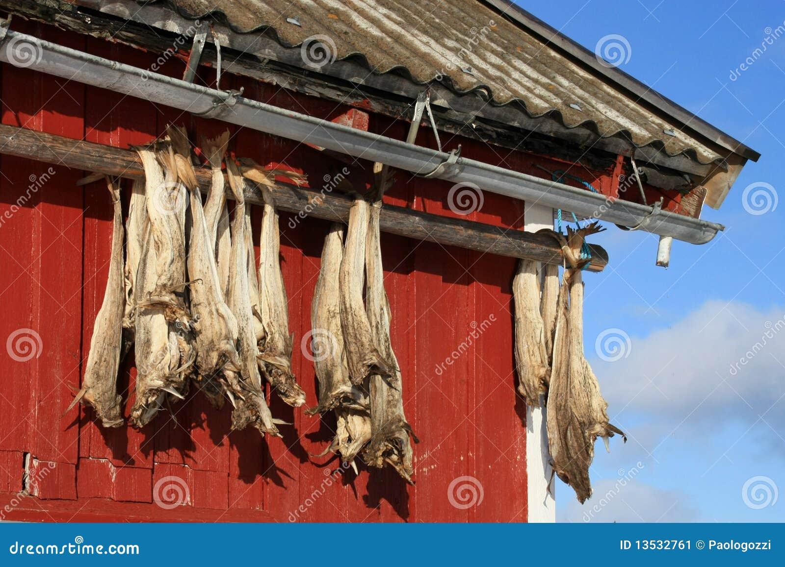 Rorbu & stockfish of Lofoten