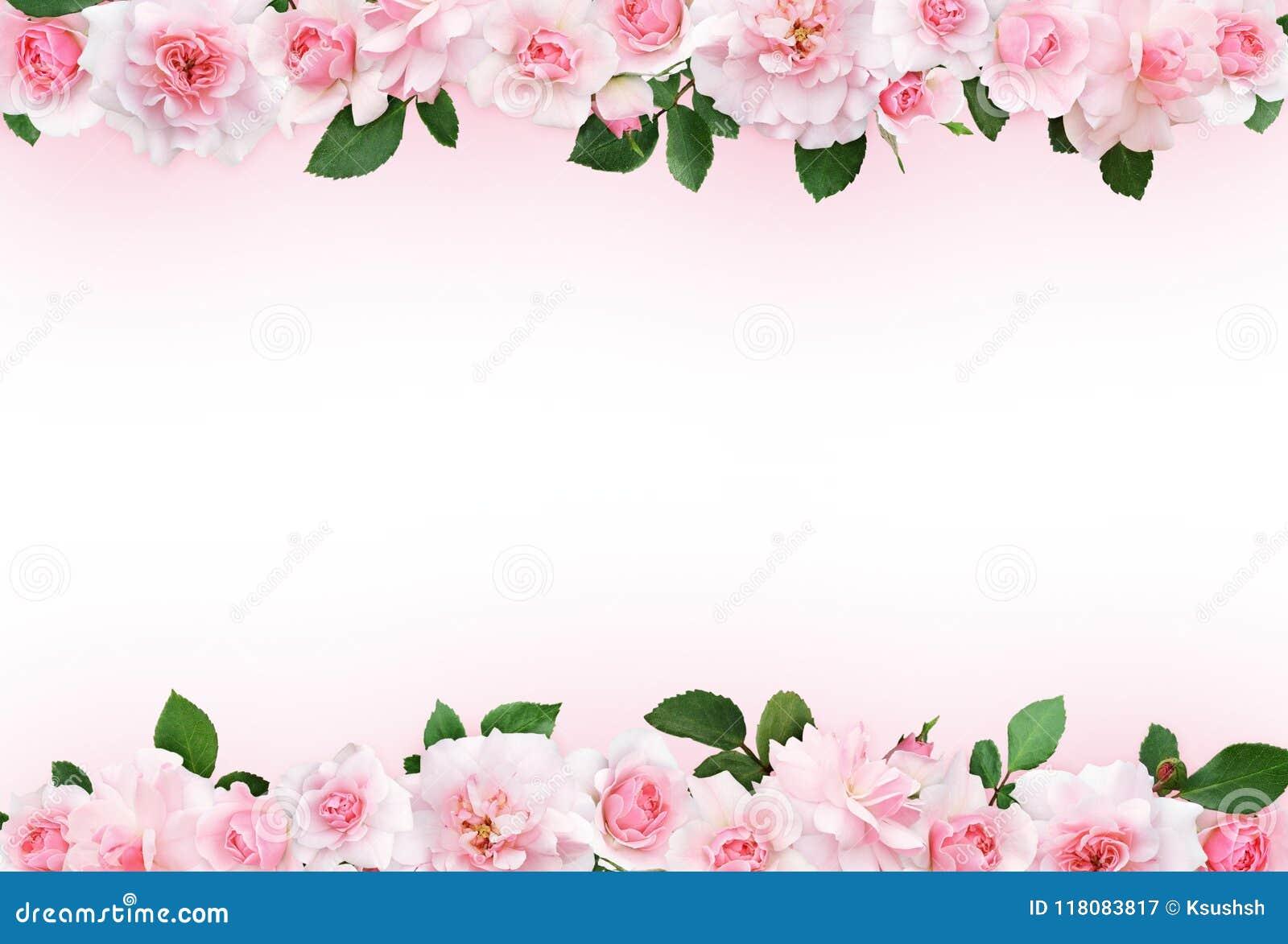 Rosa bakgrund med steg blommor och sidor
