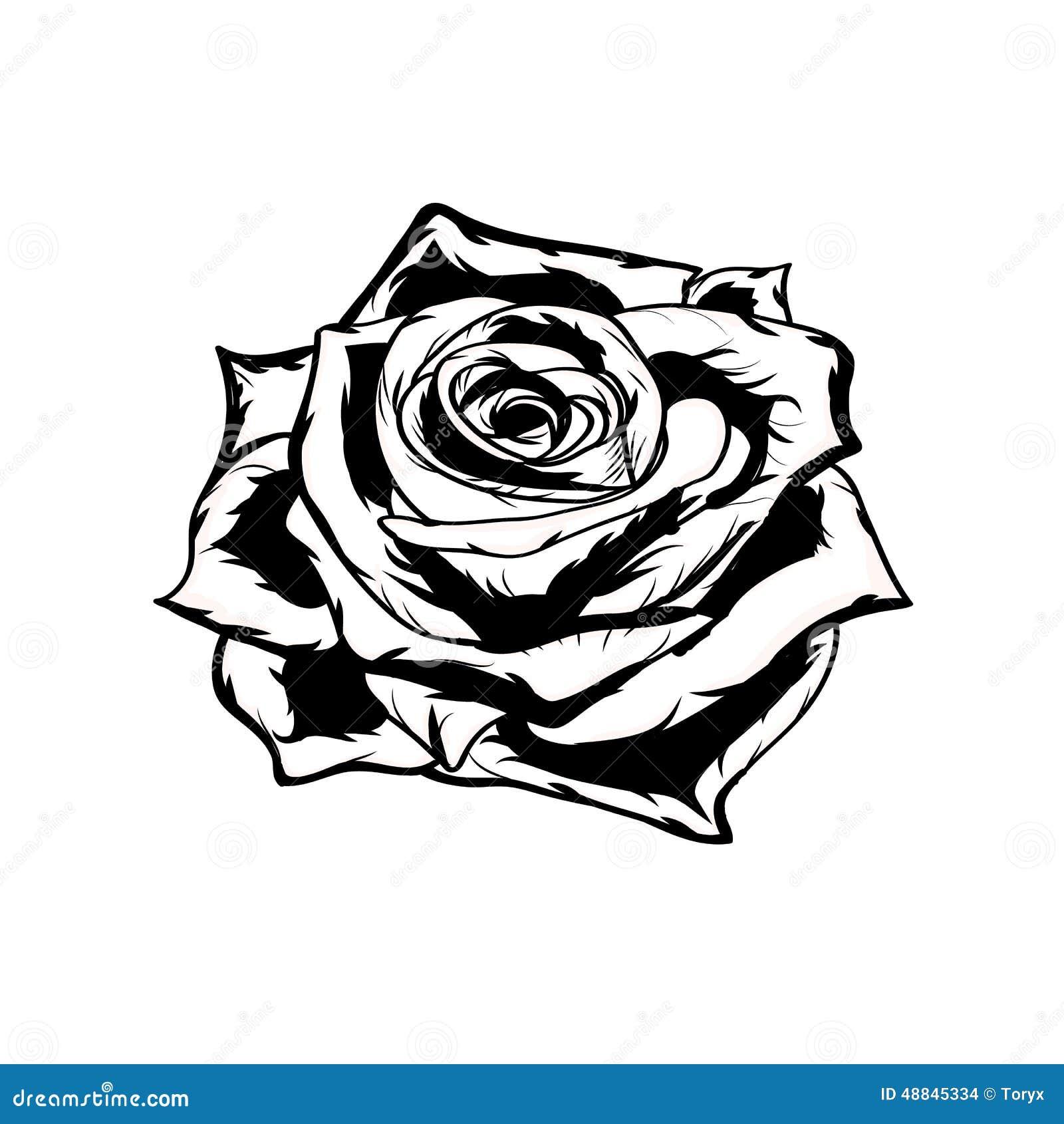 Rosa Blanco Y Negro Mano Drenada Ilustración Del Vector
