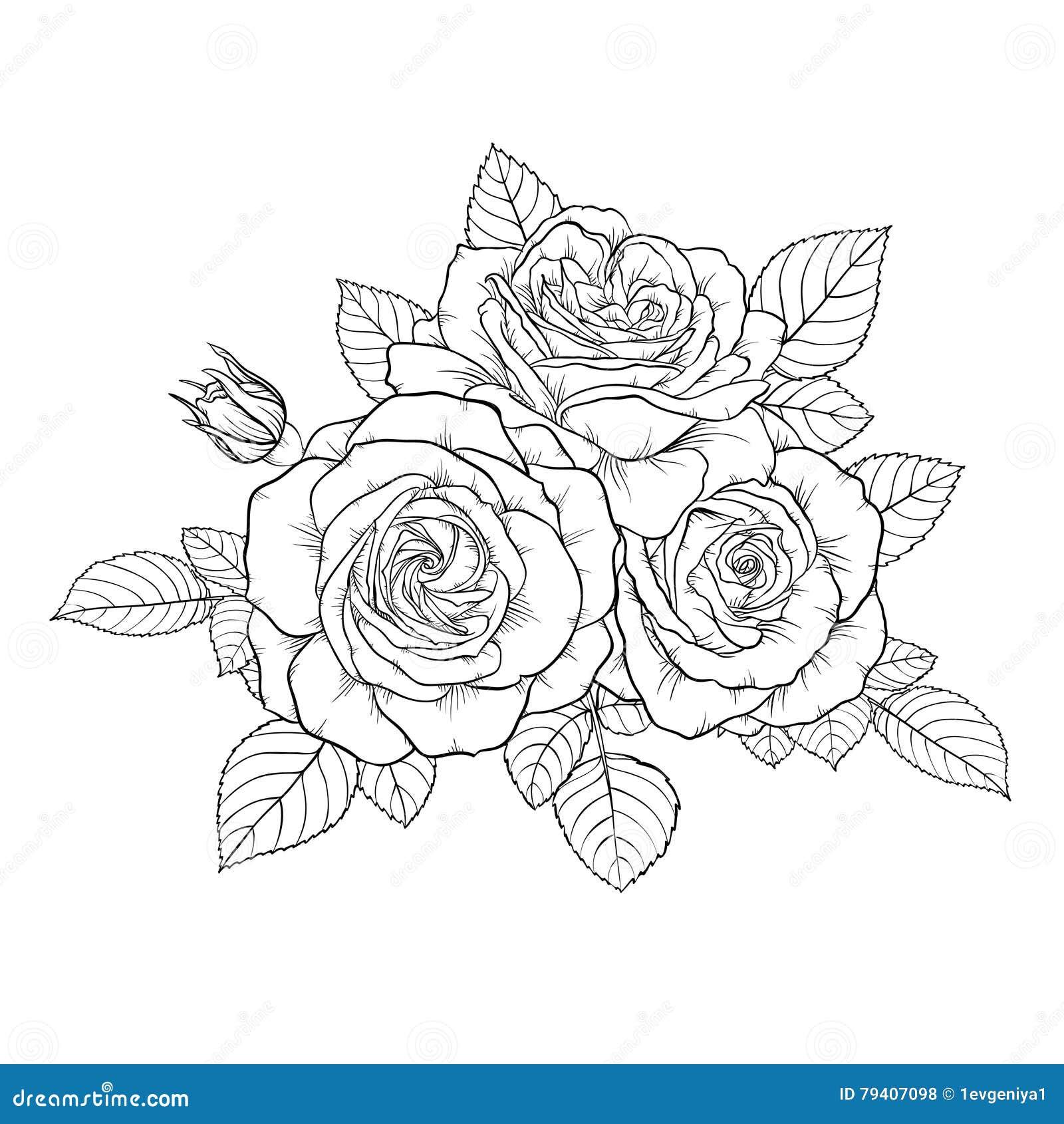 Rosa Blanco Y Negro Monocromática Hermosa Del Ramo Aislada En Fondo