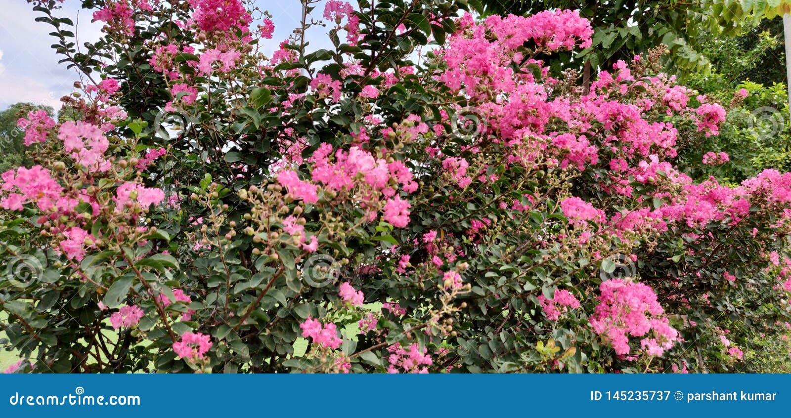 Rosa blommaväxt med enorm bakgrund