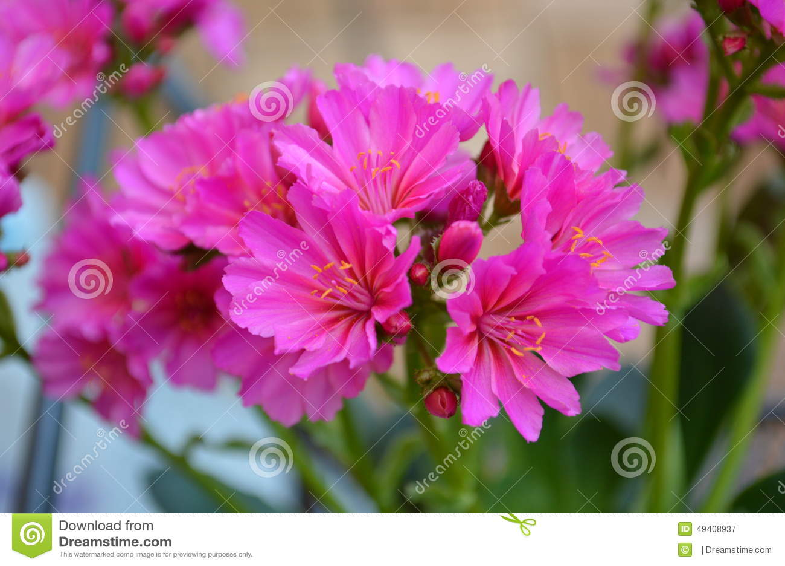 Download Rosa Blume stockbild. Bild von makro, grün, blumen, notwendigkeiten - 49408937
