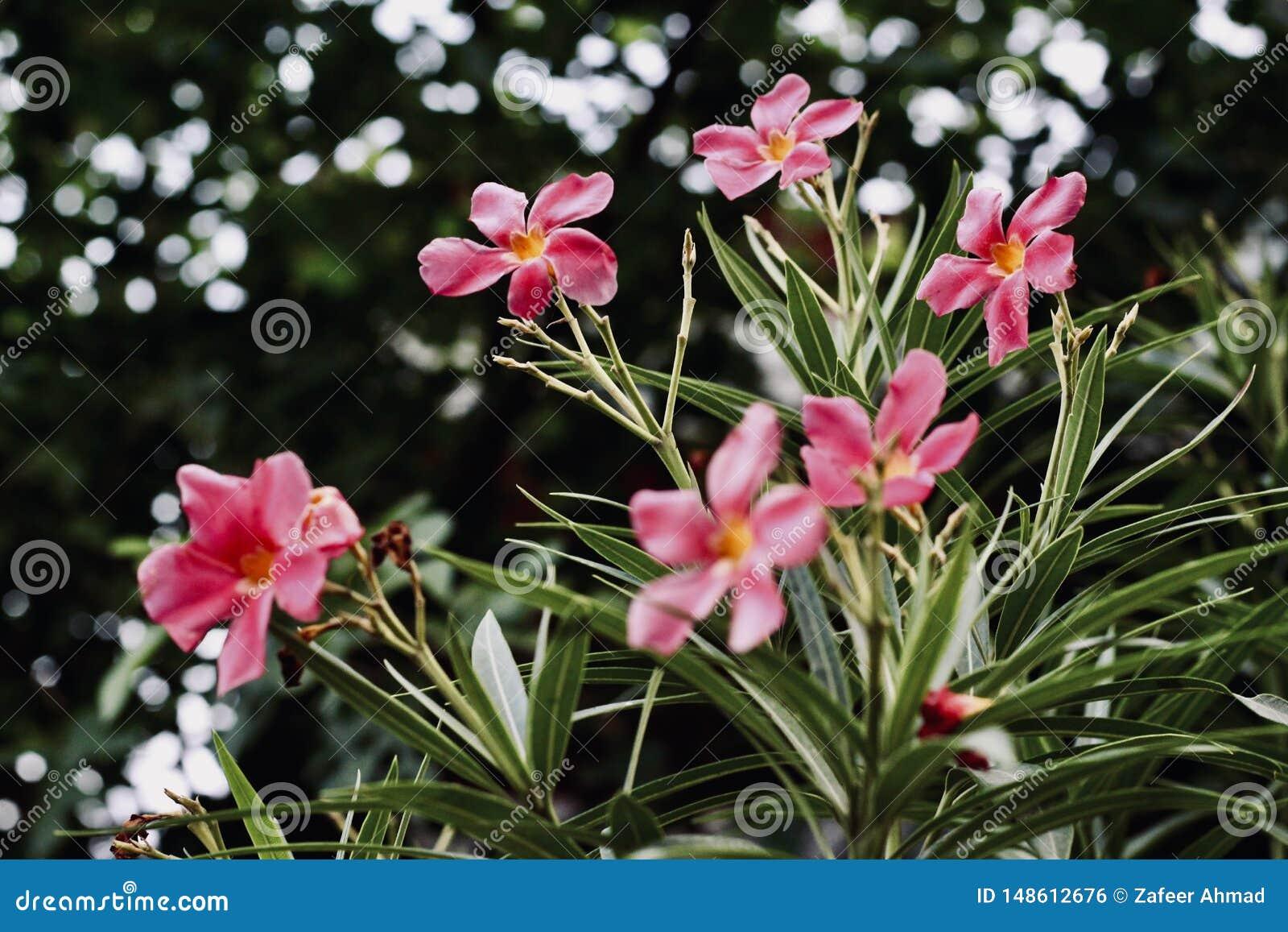 Rosa Blumen auf den Gebieten