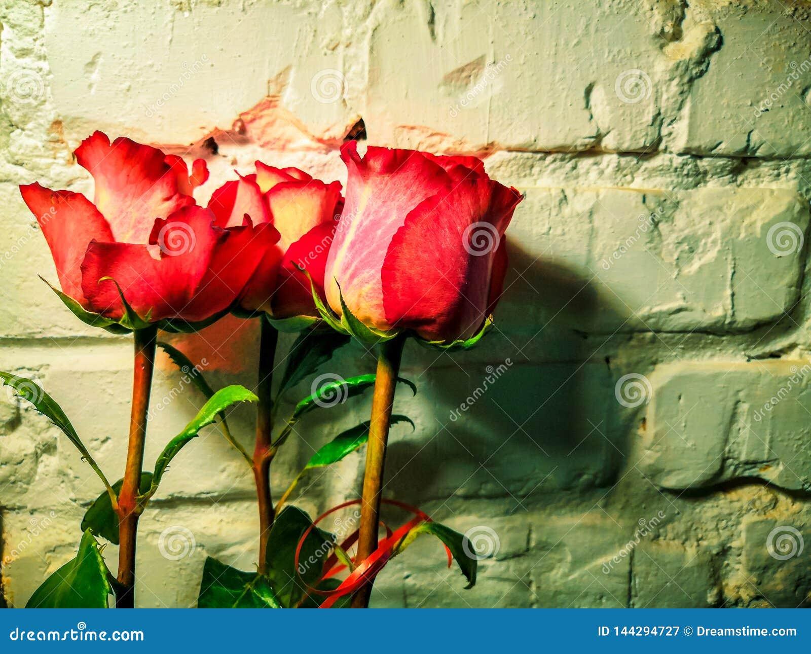 Rosa Blumen auf einem weißen Backsteinmauerhintergrund