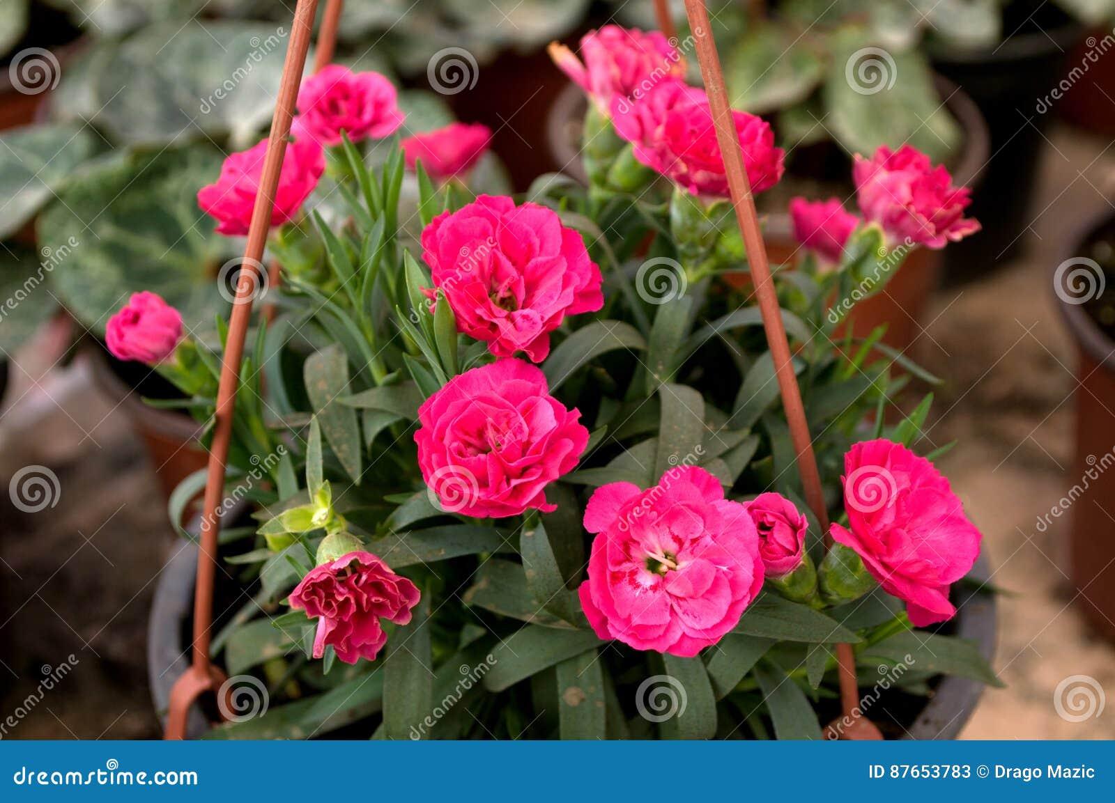 Wundervoll Welche Blumen Blühen Im März Beste Wahl Pattern Rosa Blühen Februar, Bereit Zum Frauen
