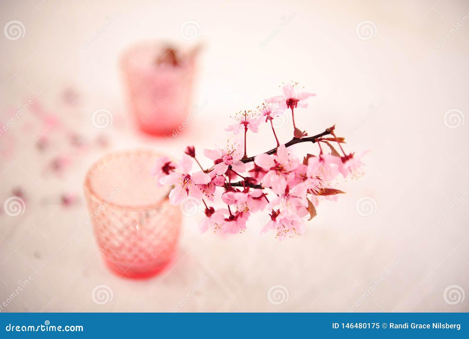 Rosa Blumen gegen undeutlichen Hintergrund