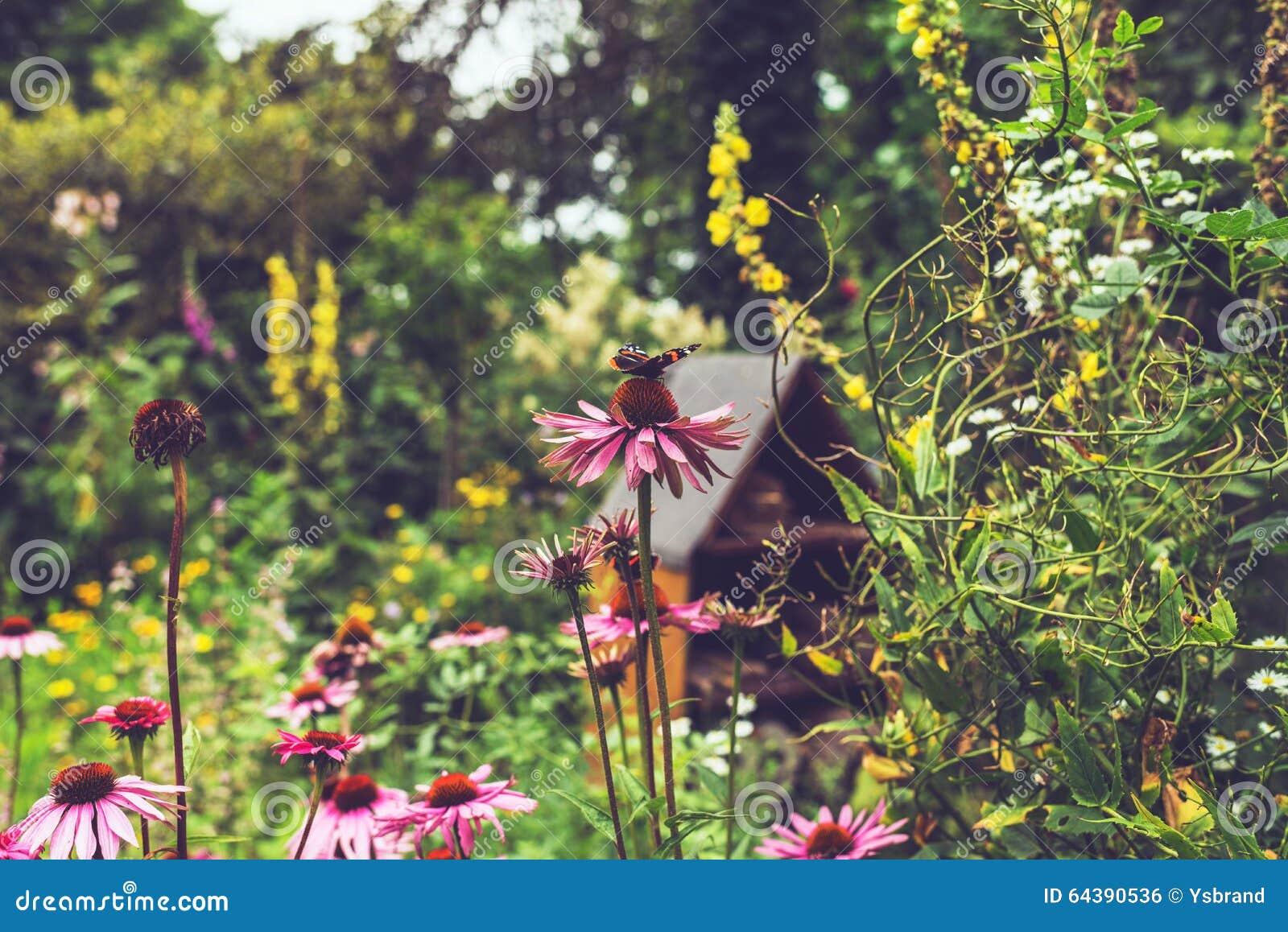 Rosa Blumen Mit Schmetterling Im Garten Stockfoto - Bild: 64390536 Blumen Schmetterlinge Im Garten