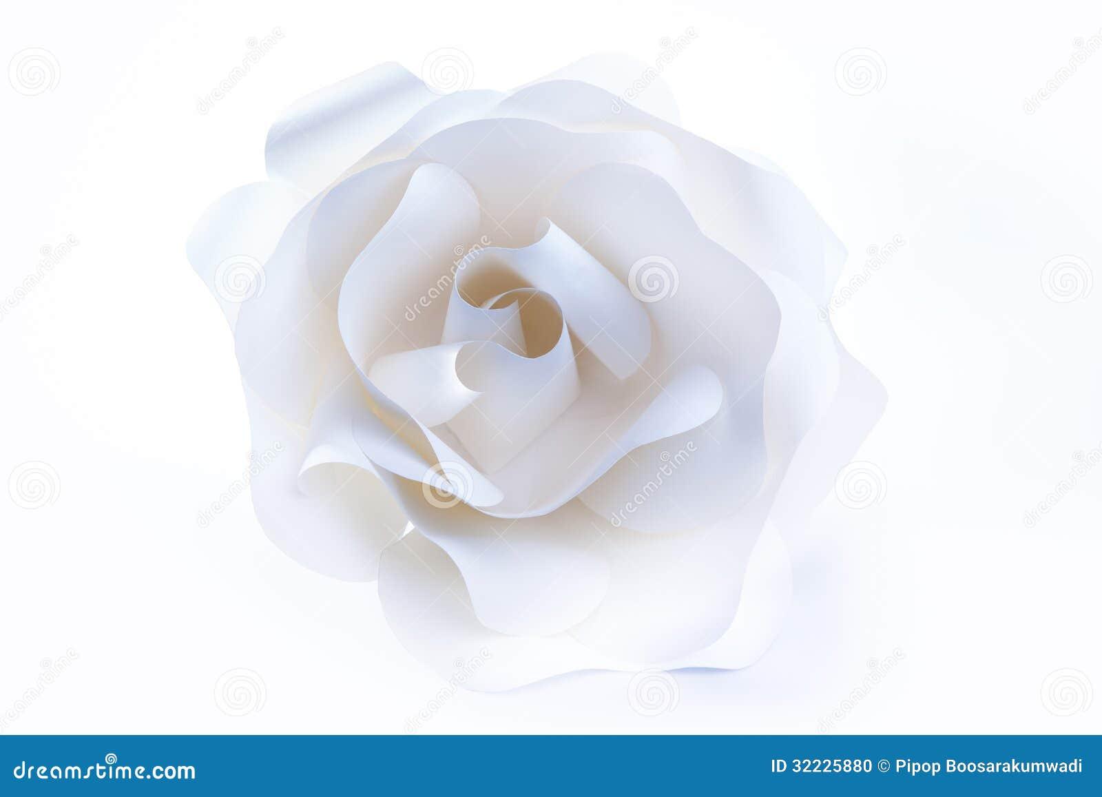 Download Rosa Bonita Do Branco No Fundo Branco. Foto de Stock - Imagem de frescor, queda: 32225880