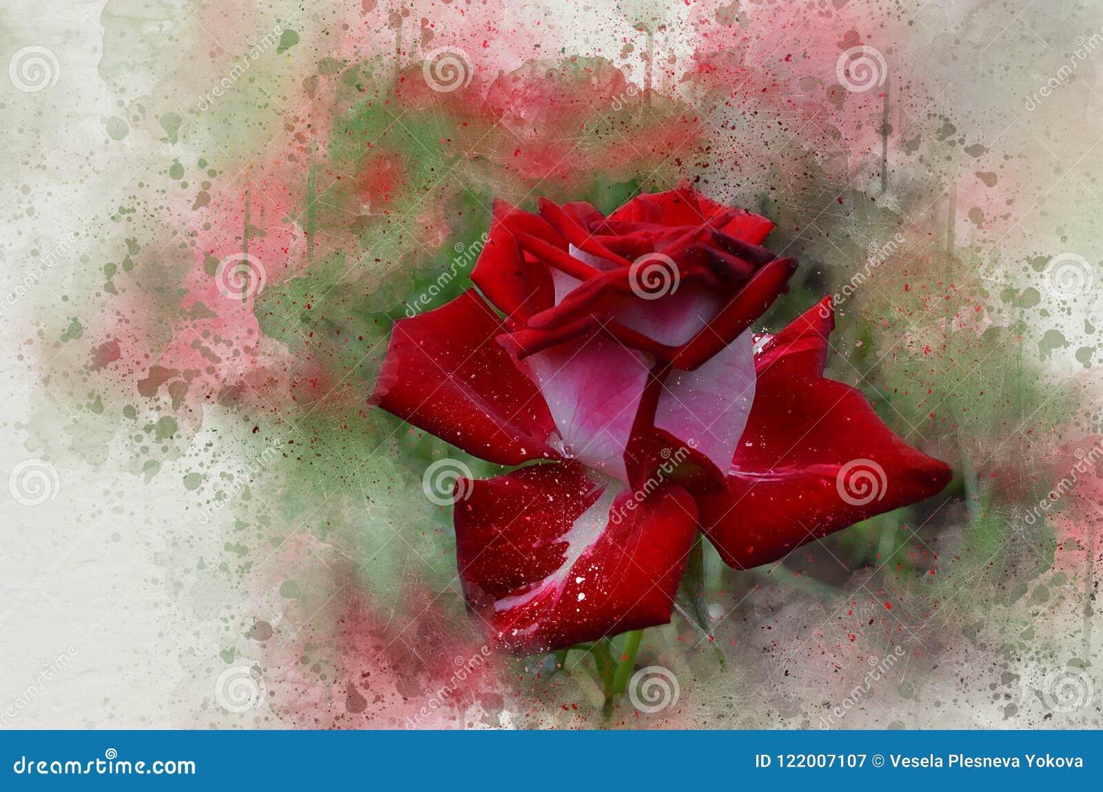 Rosa bonita pintada aquarela do vermelho