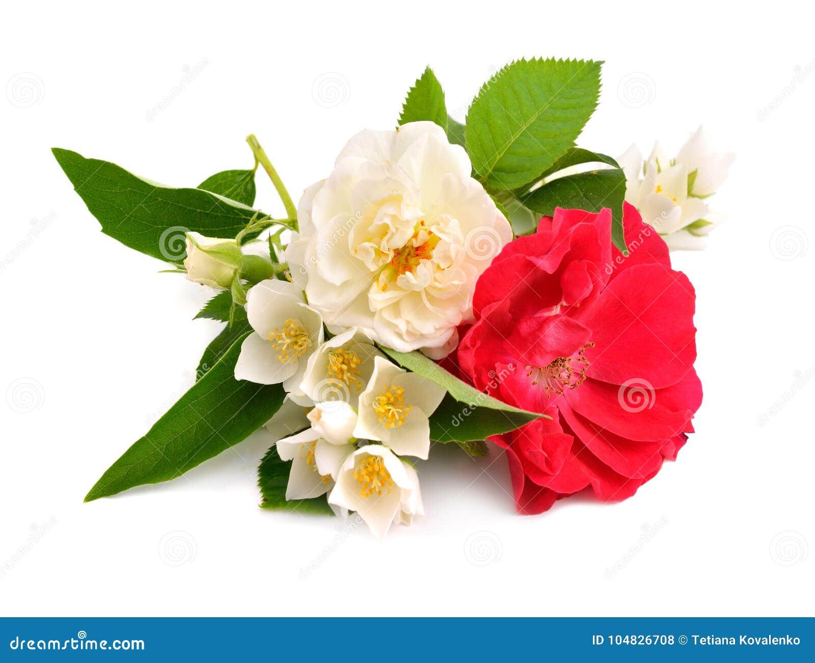 Rosa com o jasmim no fundo branco