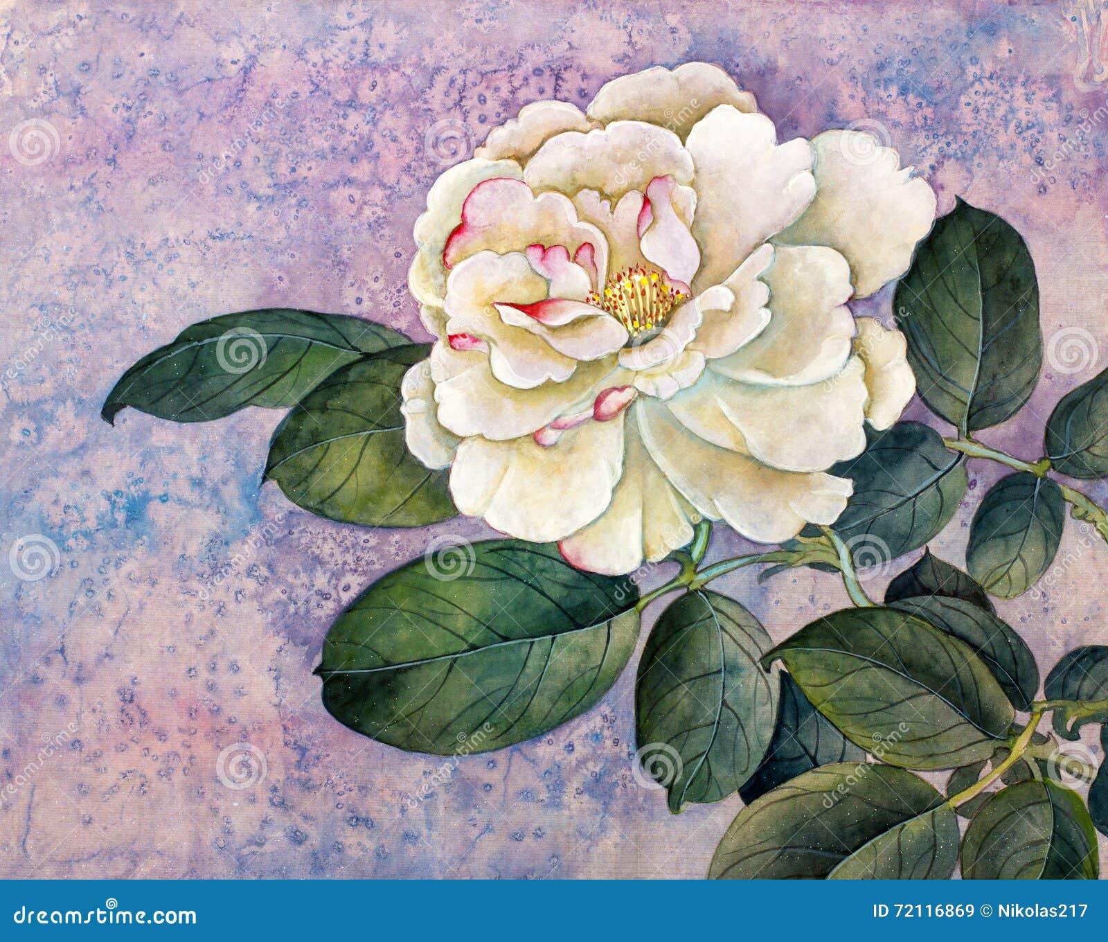 Rosa del blanco en fondo de la lila