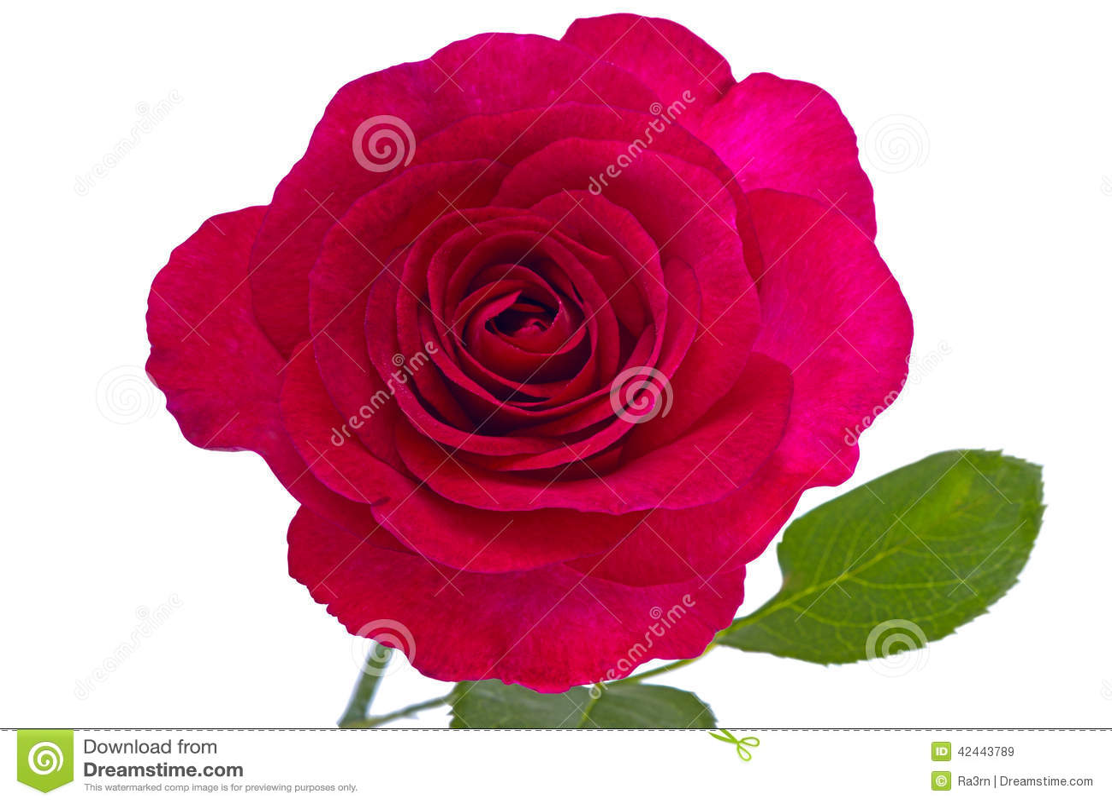 Rosa del marrón