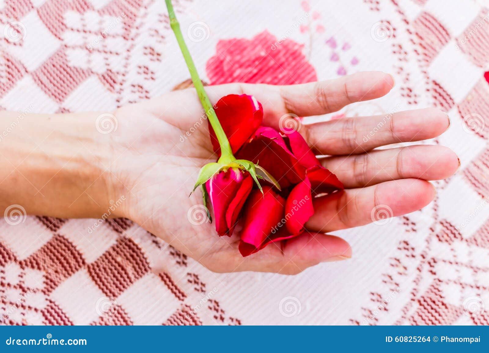 Rosa del rojo con las manos