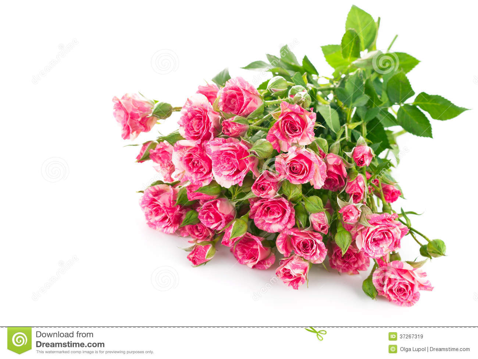 Rosa del rosa del ramo con la hoja verde