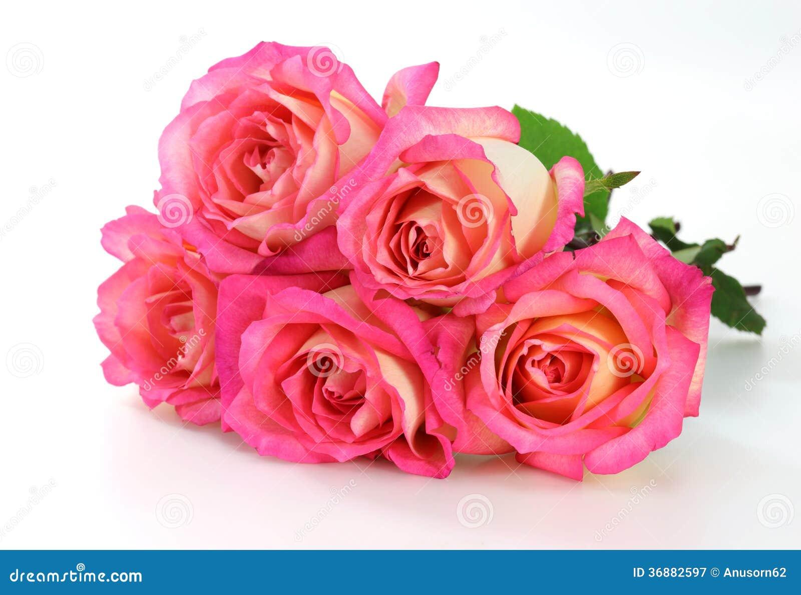Download Rosa di rosa immagine stock. Immagine di saluto, sensibilità - 36882597
