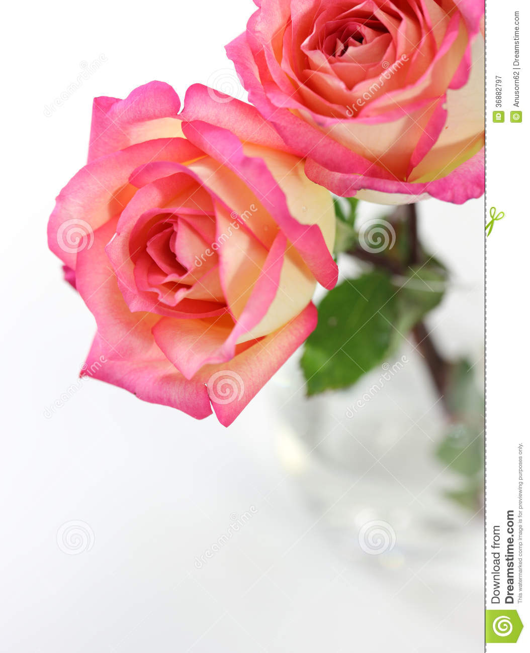 Download Rosa di rosa immagine stock. Immagine di flora, closeup - 36882797