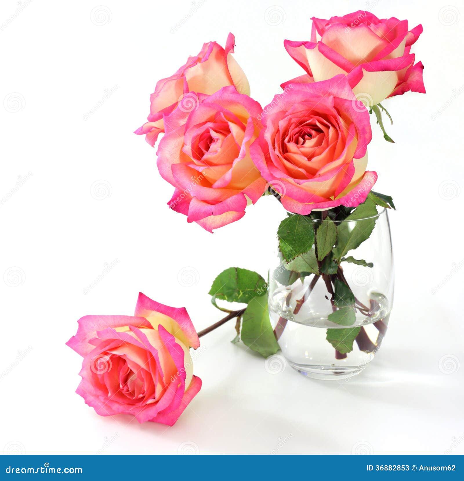 Download Rosa di rosa immagine stock. Immagine di anniversario - 36882853