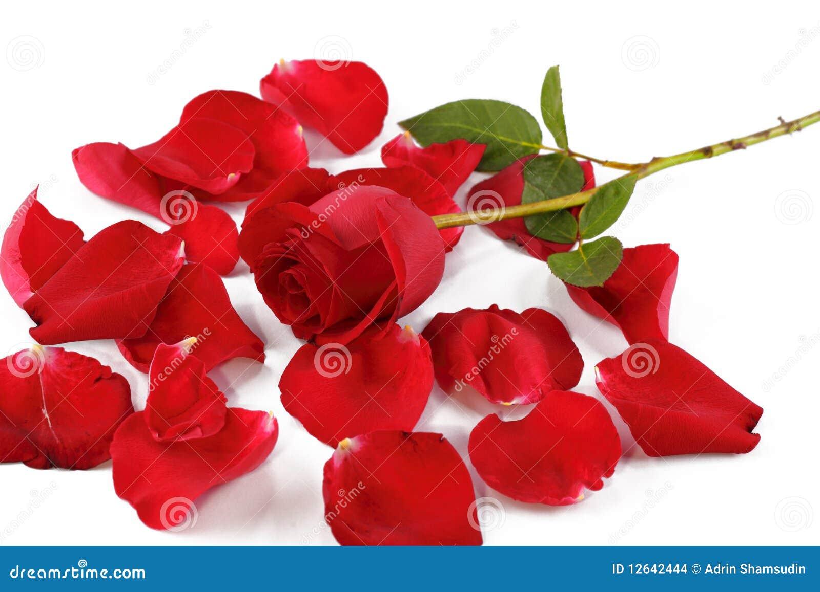 Rosa do vermelho e pétalas cor-de-rosa