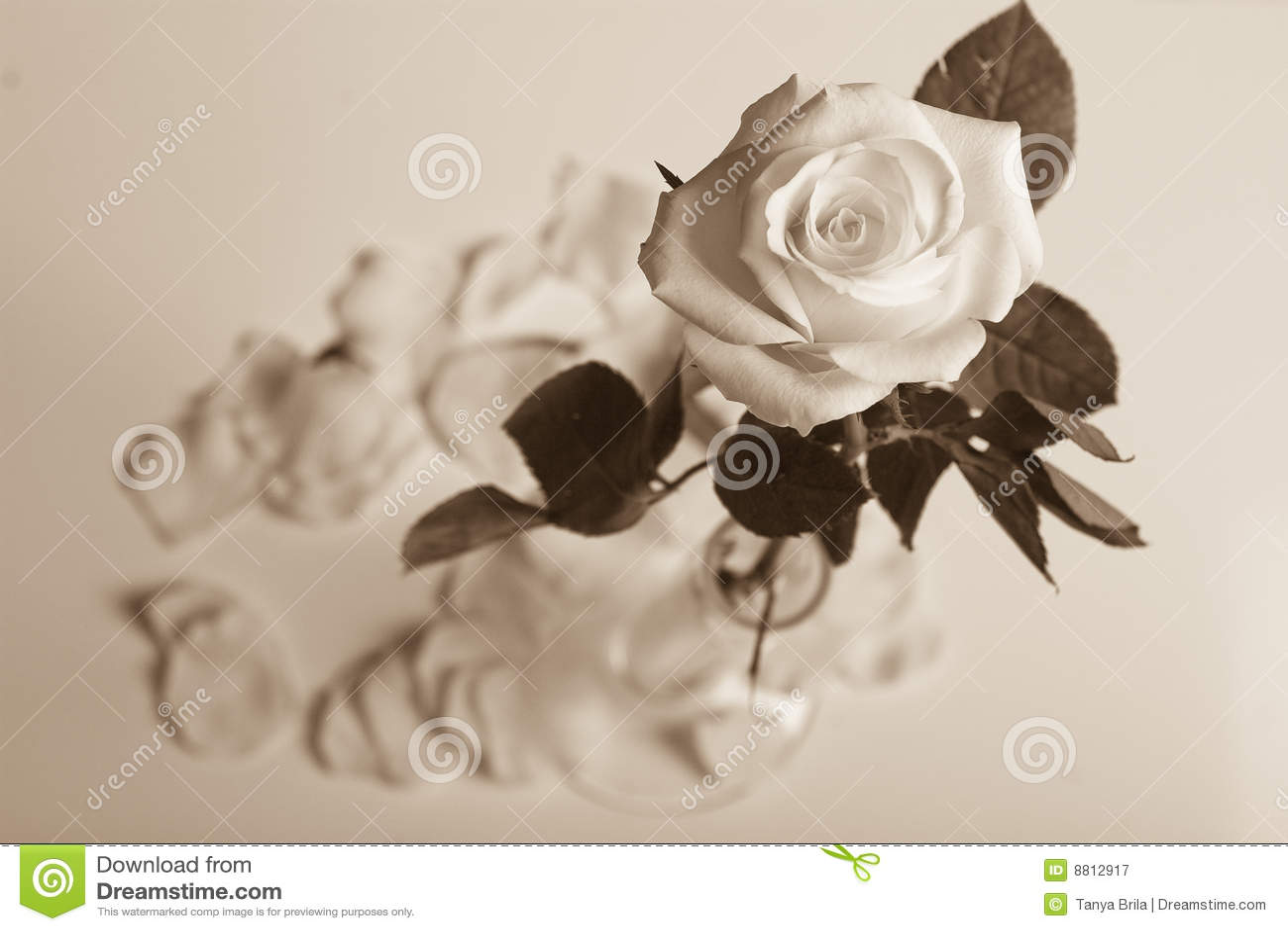 Rosa em um vaso