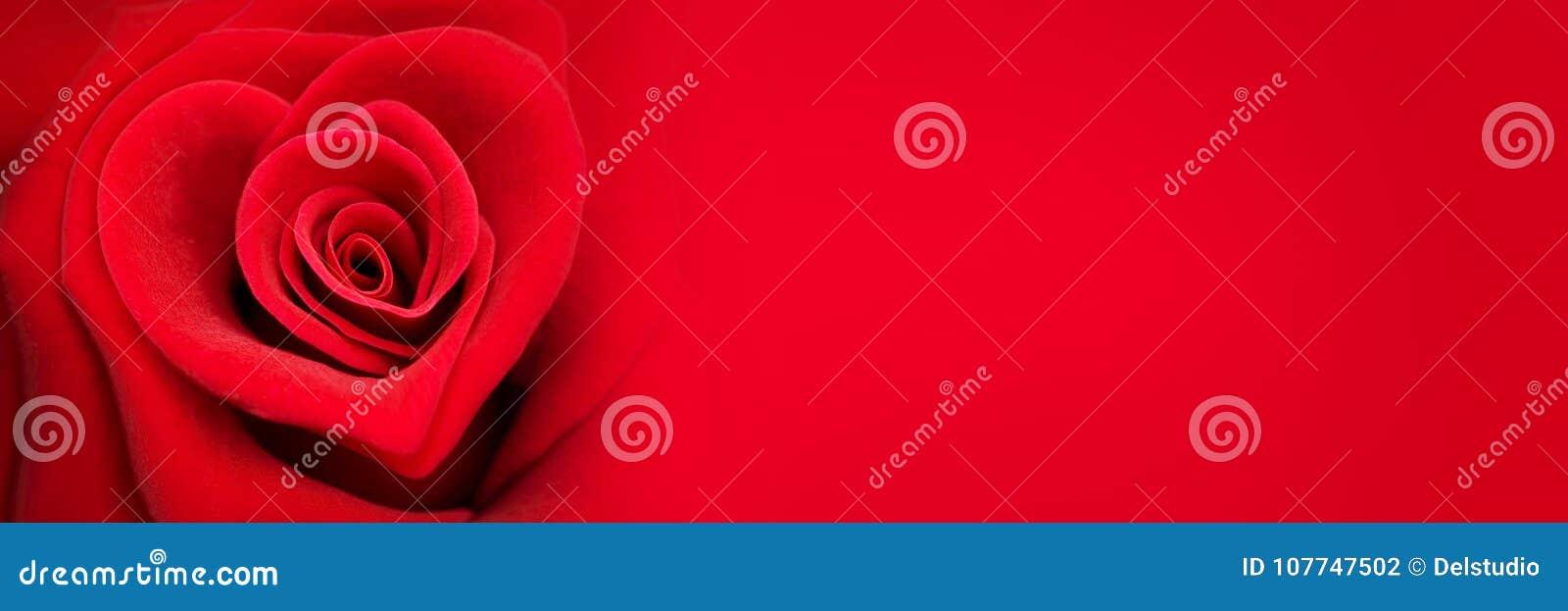 Rosa en la forma de un corazón, bandera del rojo del día de tarjetas del día de San Valentín