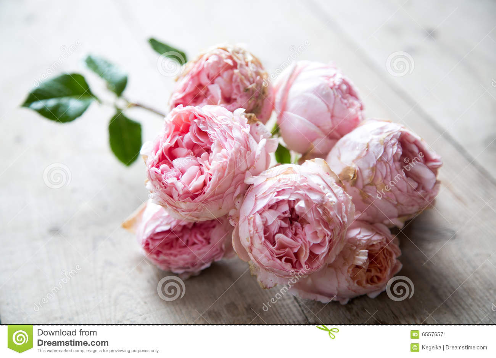 rosa englische rosen auf einem bretterboden stockbild bild von hintergrund blumen 65576571. Black Bedroom Furniture Sets. Home Design Ideas