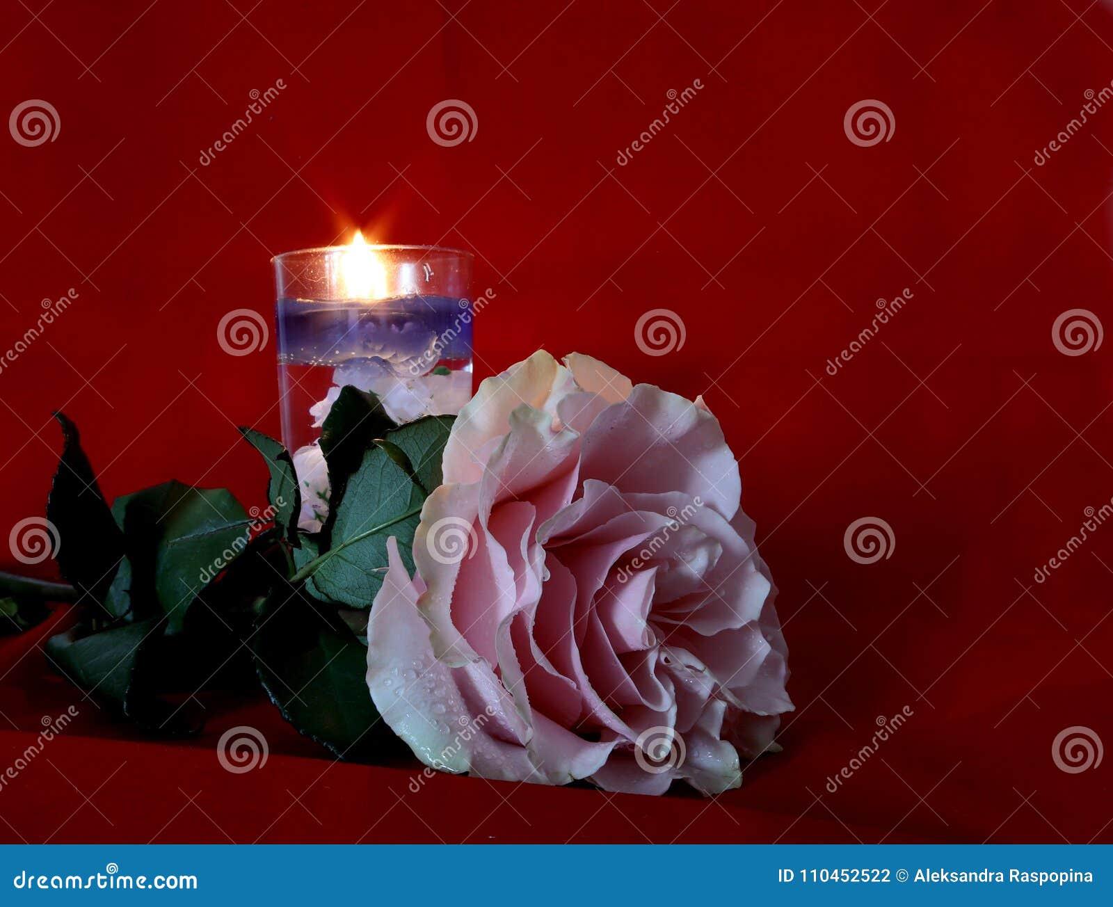 Rosa färgros och stearinljus på röd sammetbakgrund