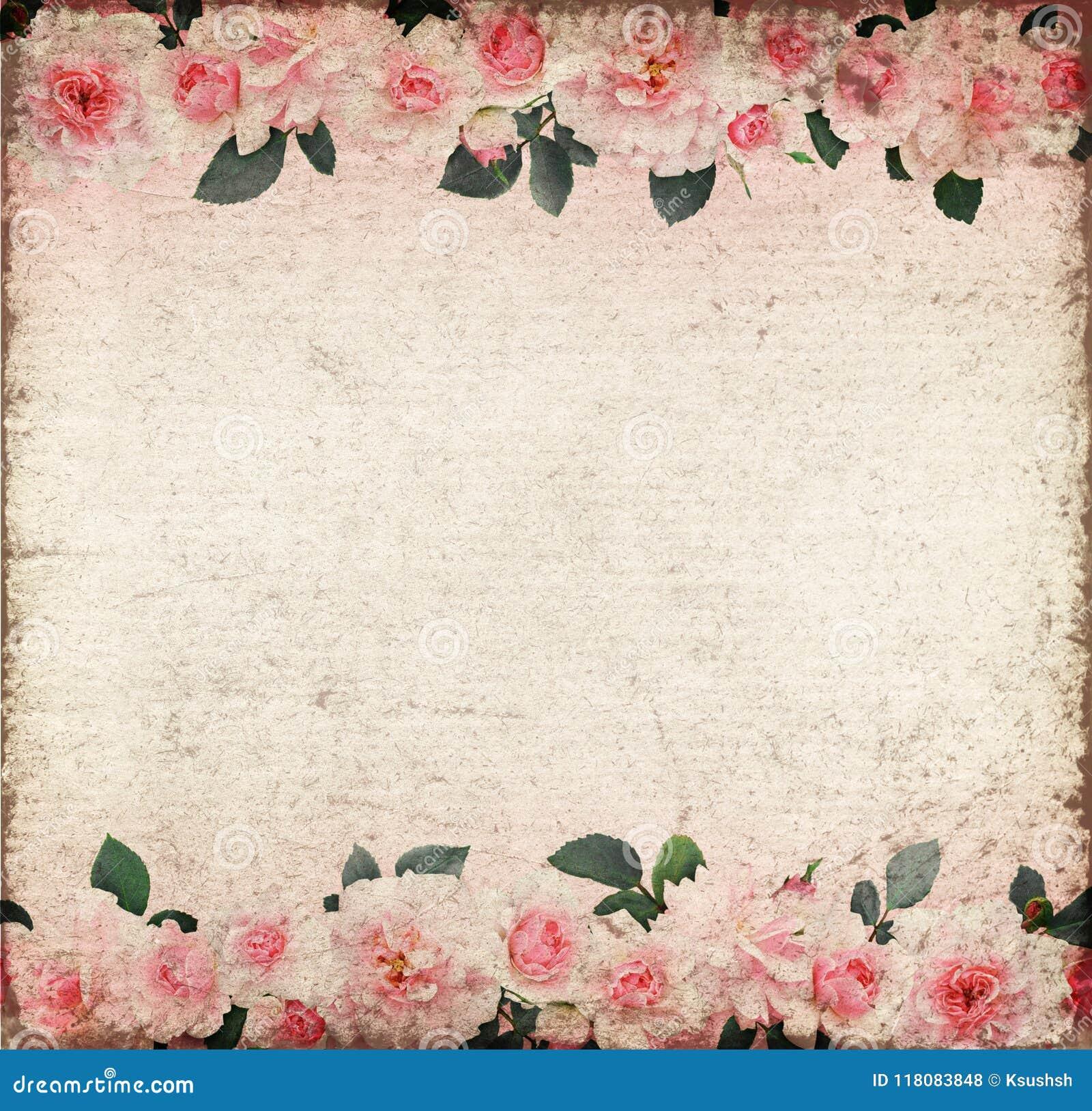 Rosa färgrosblommor och sidor på gammalt papper