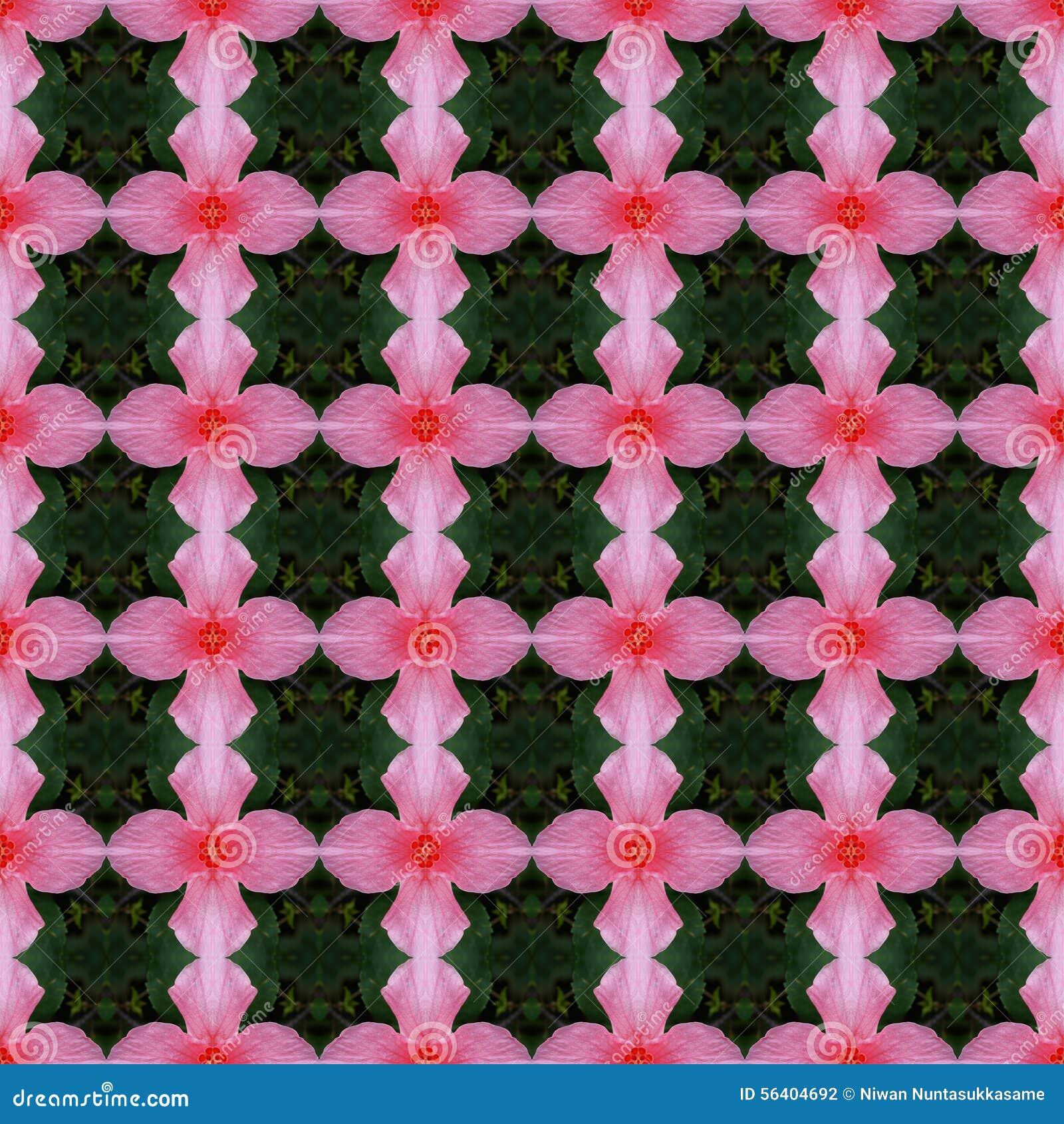 Rosa Farbe der Hibiscusblume in voller Blüte nahtlos