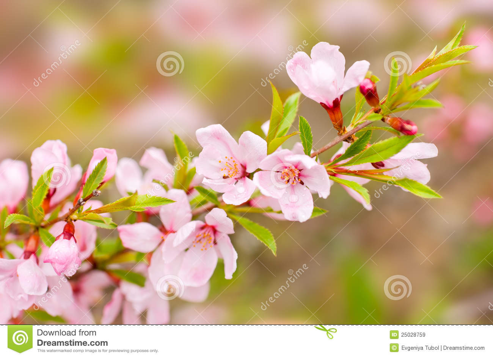 Rosa fjäder för blommor