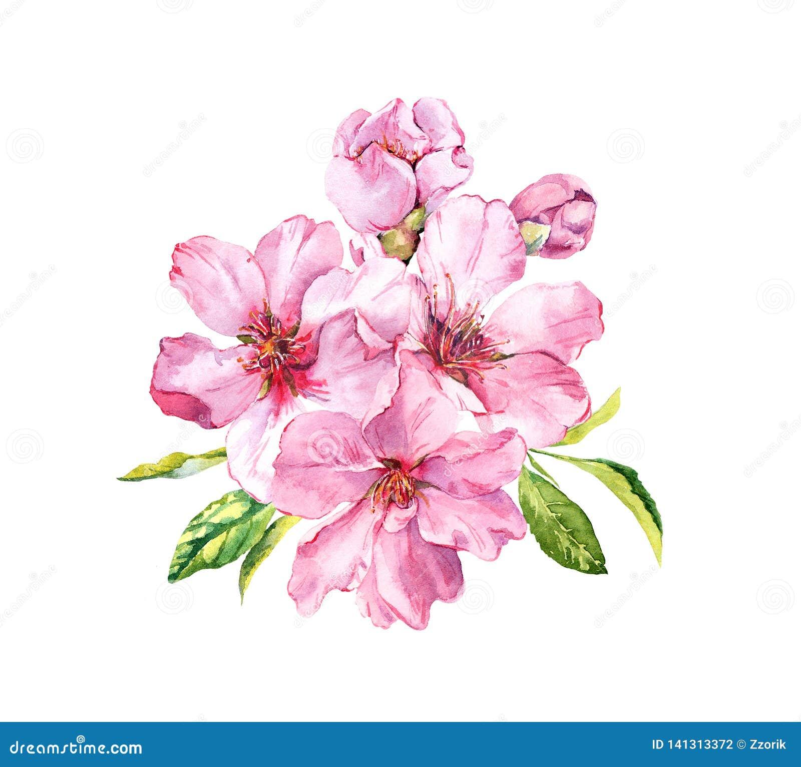 Rosa fjäder för blommor Körsbärsröd blomning, mandel, äpple, sakura vattenfärg