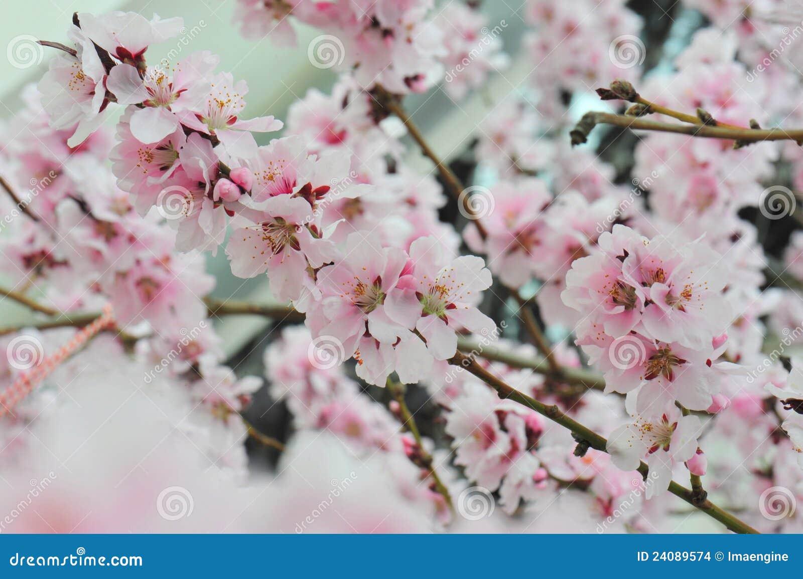 fina bilder på blommor