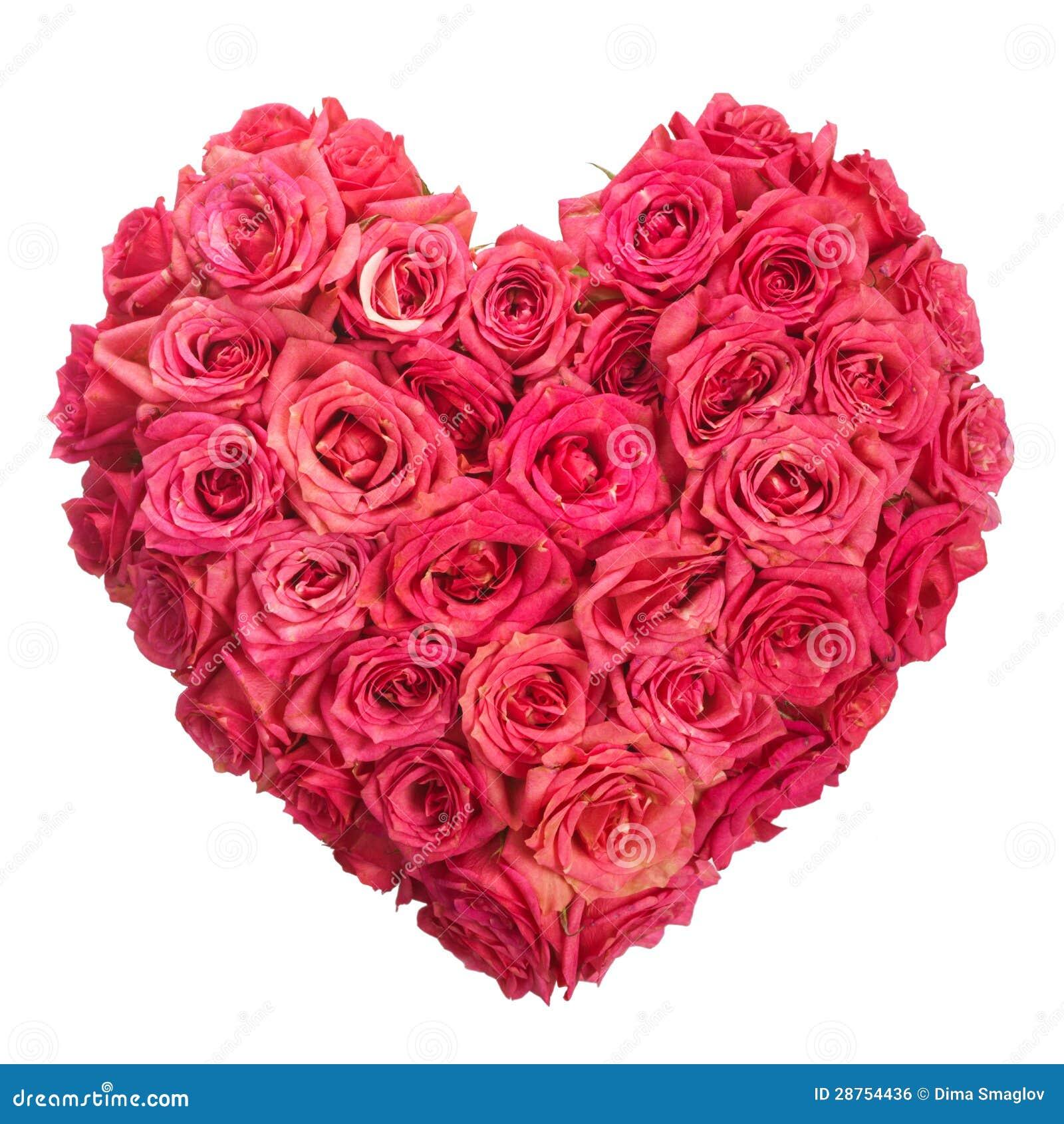 Rosa floresce o coração sobre o branco. Valentim. Amor
