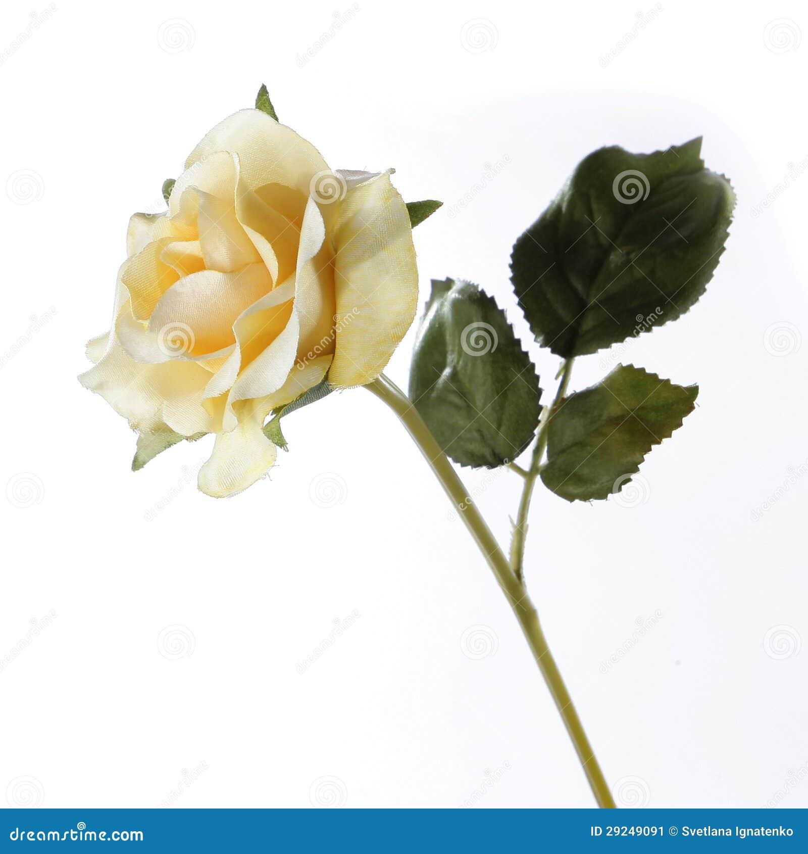 Download Rosa Fresca Do Amarelo Em Um Fundo Branco Imagem de Stock - Imagem de beleza, stalk: 29249091
