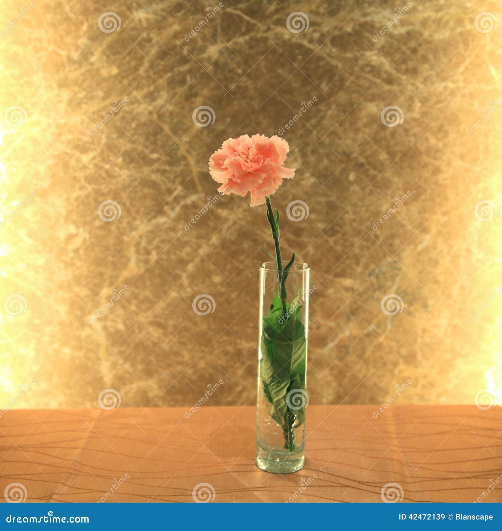 Rosa Gartennelkenblume mit goldenem Hintergrund