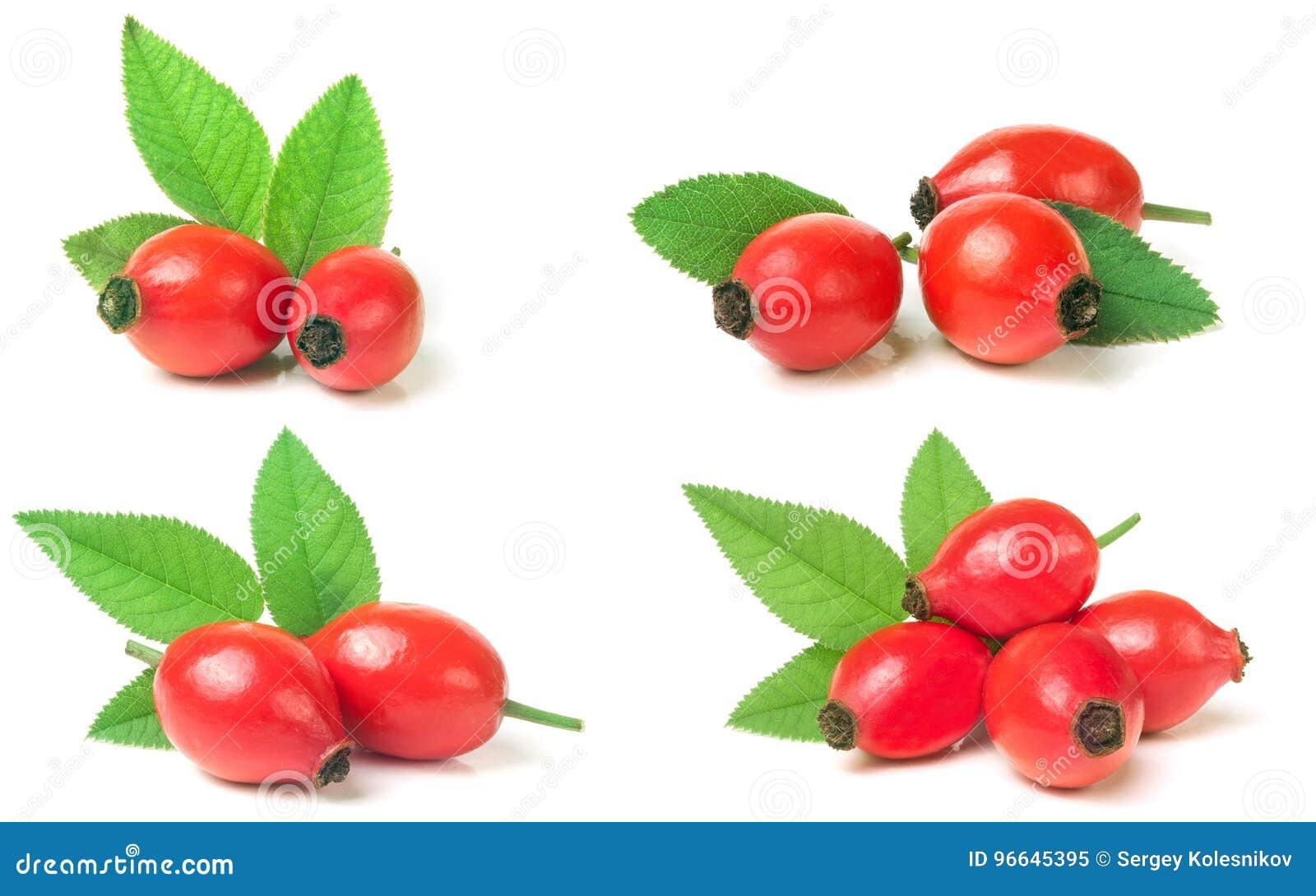 Rosa höftbär med bladet som isoleras på vit bakgrund Uppsättning eller Co