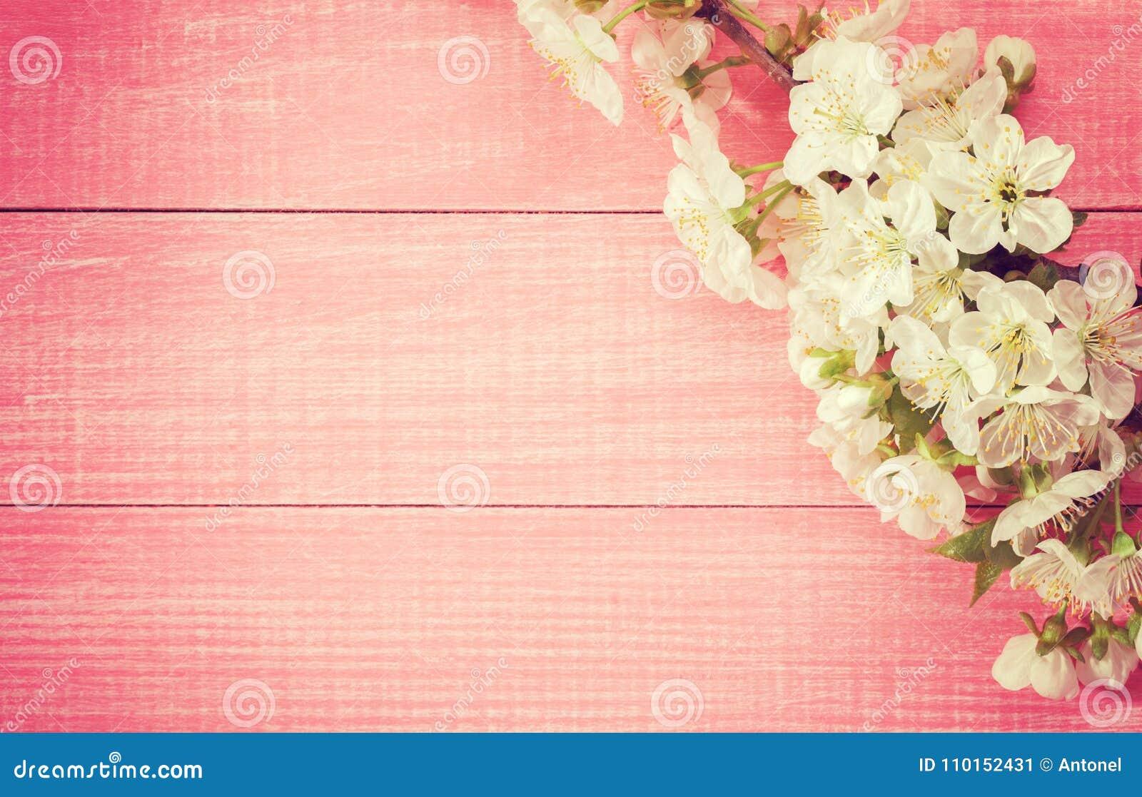 Rosa hölzerner Hintergrund mit blühender süßer Kirsche verzweigt sich Getontes Bild