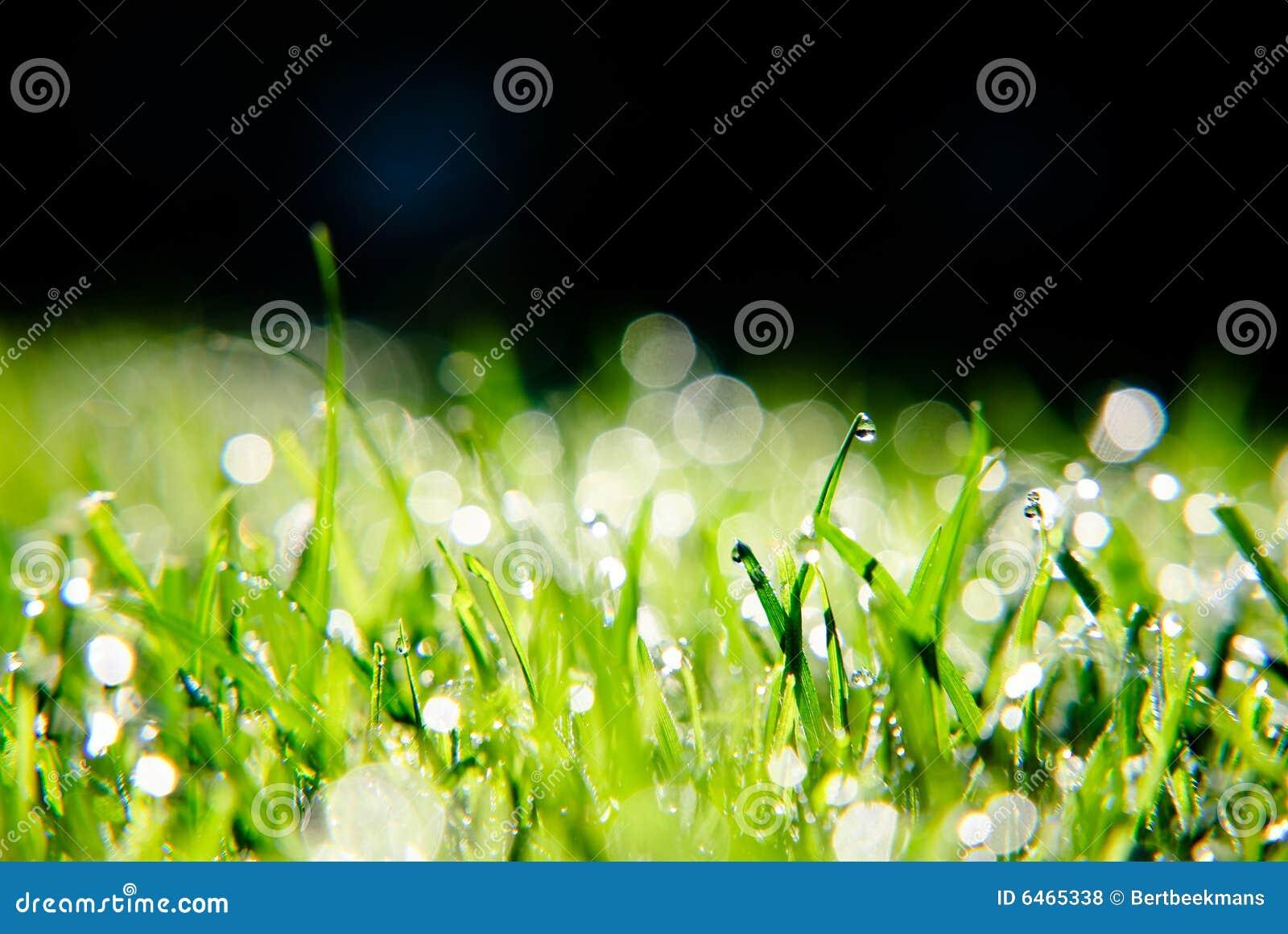Rosa kropli trawy.