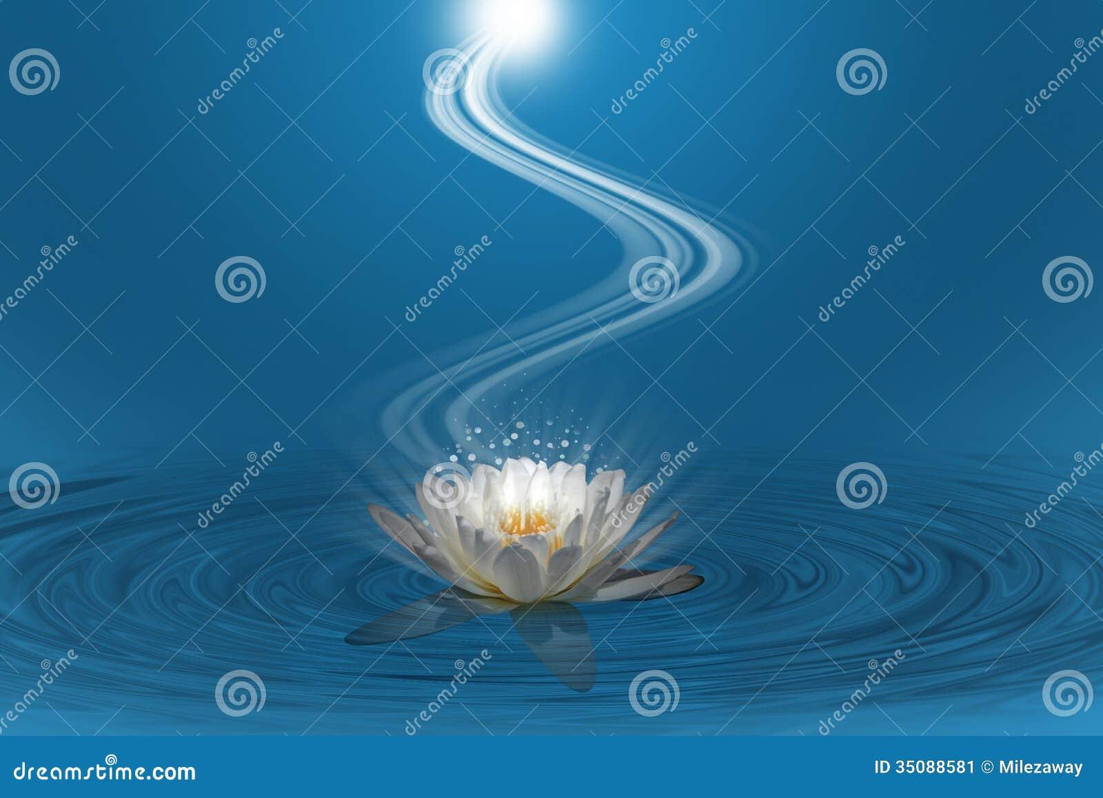 Rosa lotusblomma med spiralt ljus