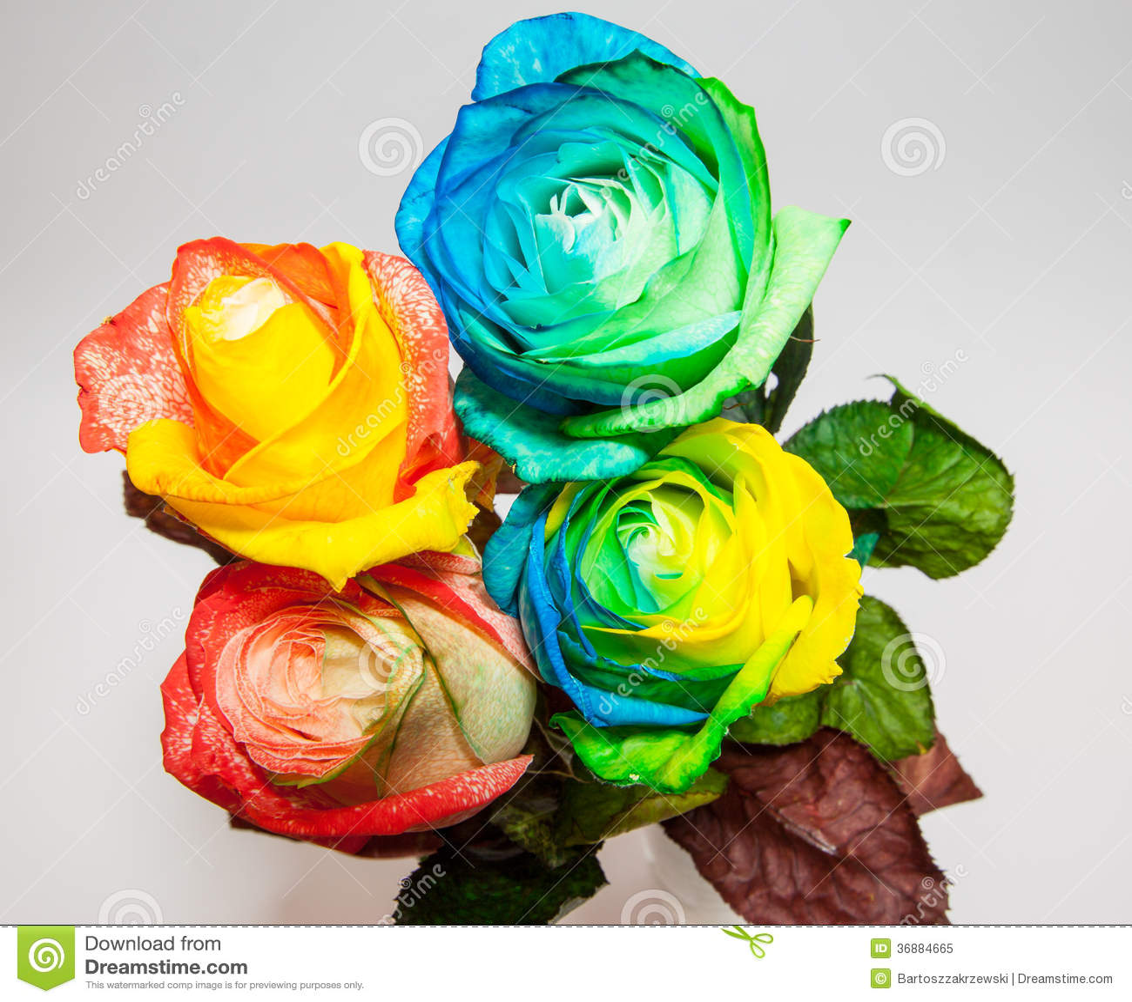 Download Rosa in molti colori immagine stock. Immagine di colorful - 36884665