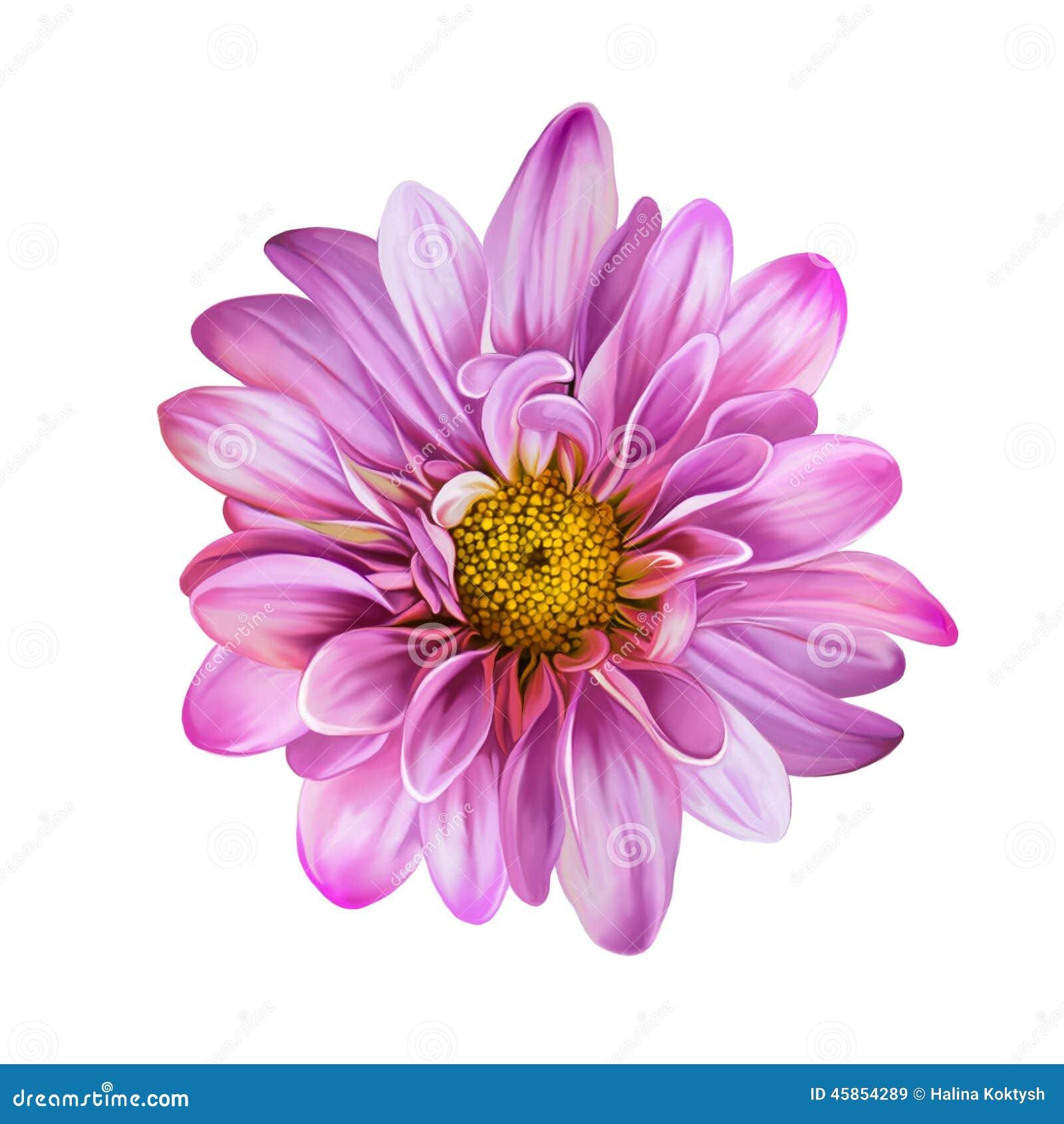 rosa mona lisa blume blume stock abbildung illustration von chrysantheme blume 45854289. Black Bedroom Furniture Sets. Home Design Ideas