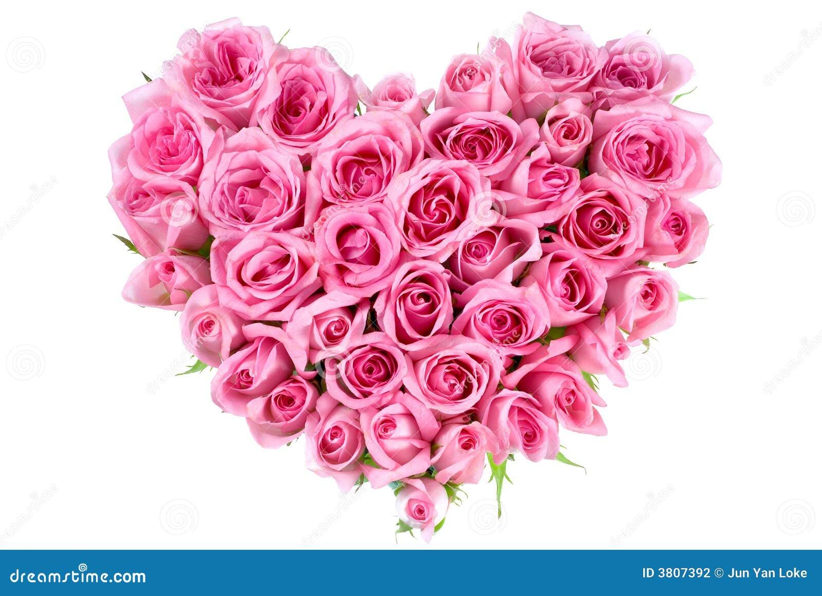 Rosa na forma do amor