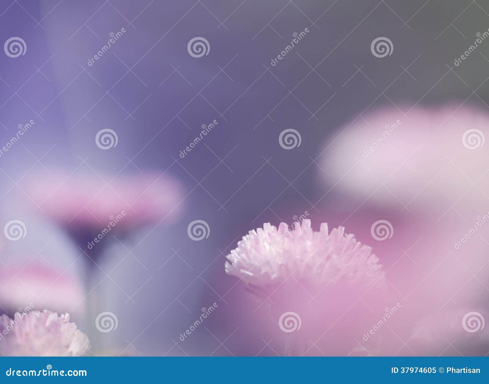 Rosa naturbakgrund för mjukt ljus