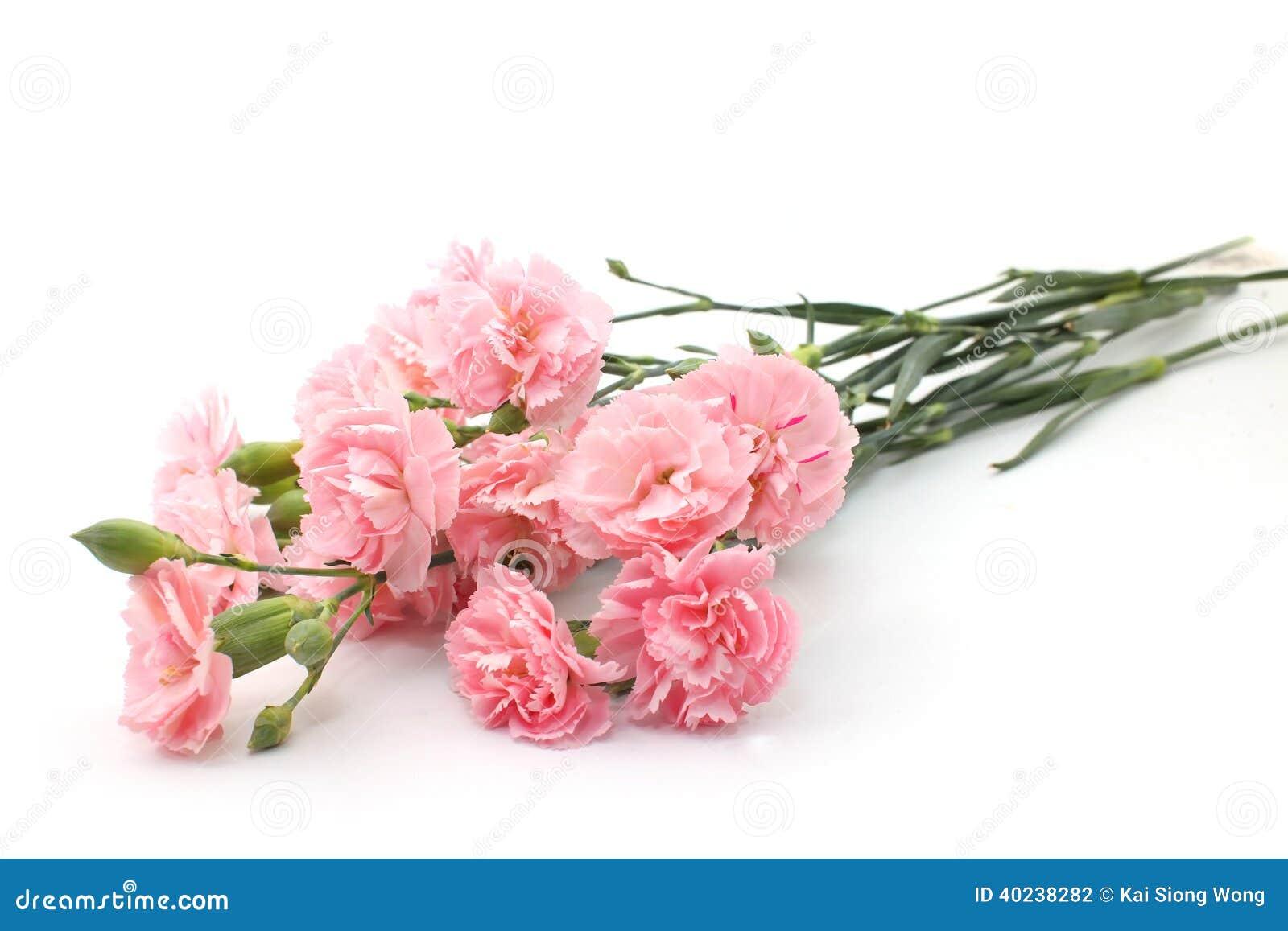 Rosa nejlika